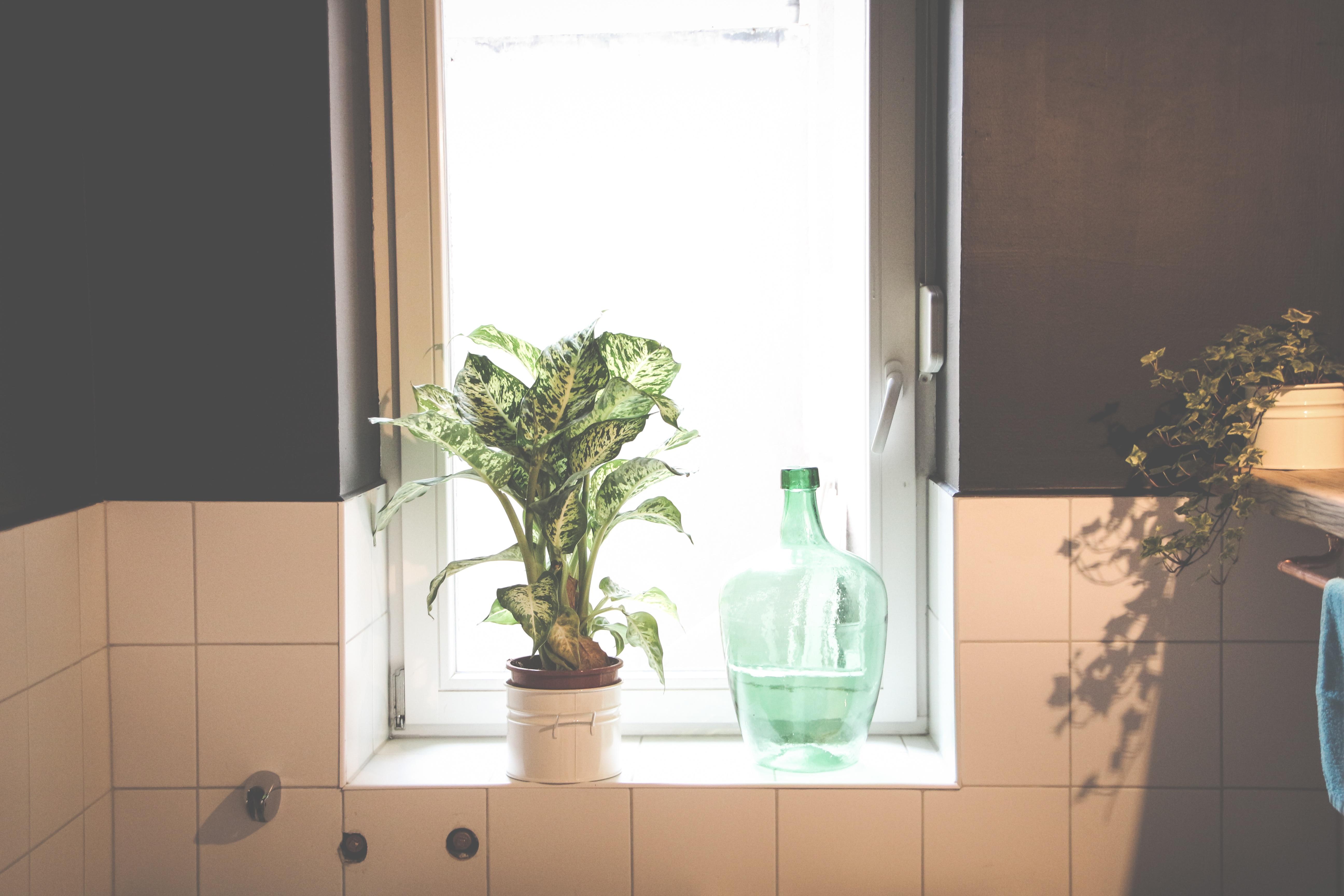 무료 이미지 : 유리, 집, 벽, 녹색, 커튼, 방, 조명, 인테리어 ...