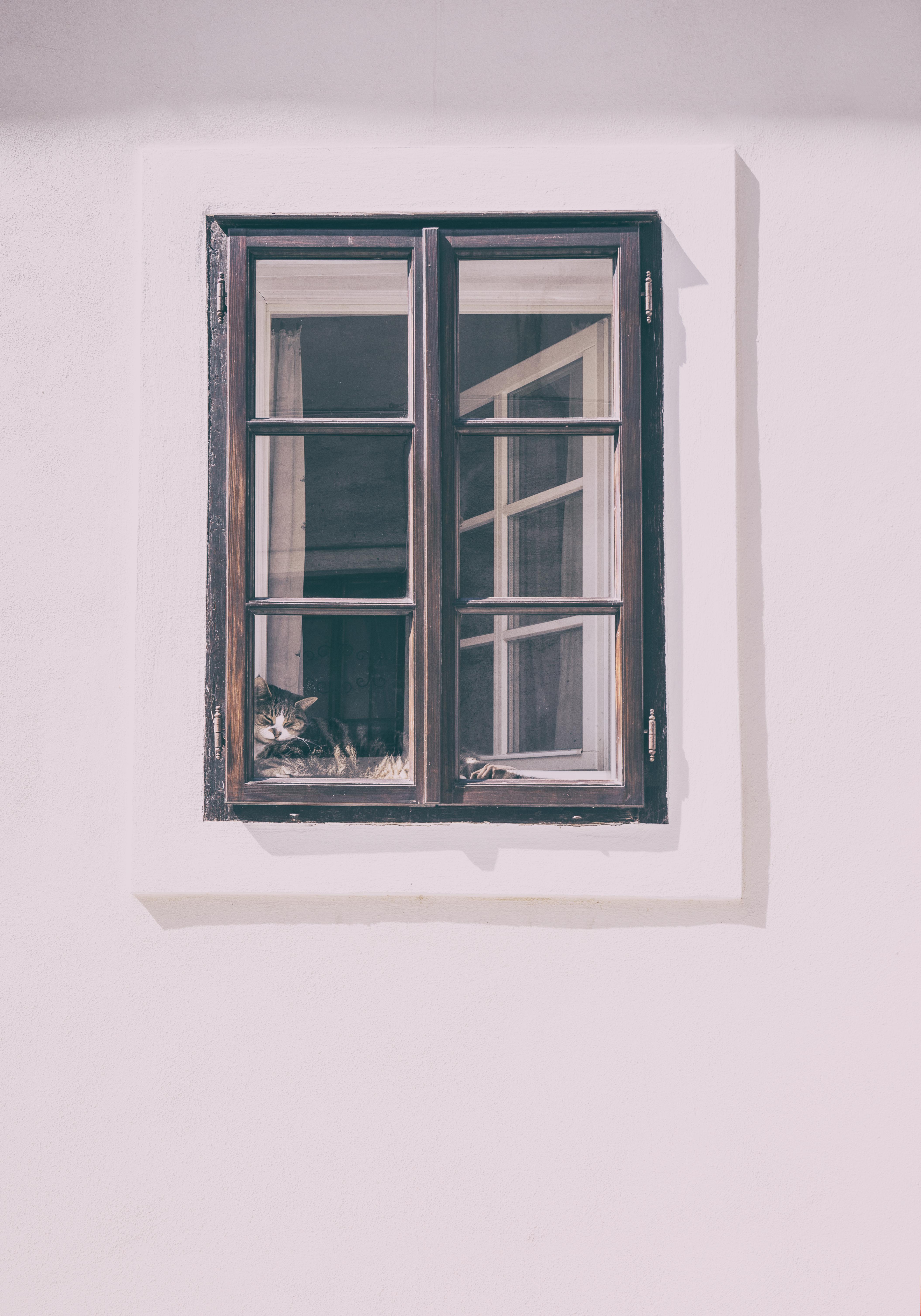 Fotos gratis : vaso, pared, gato, habitación, diseño de interiores ...