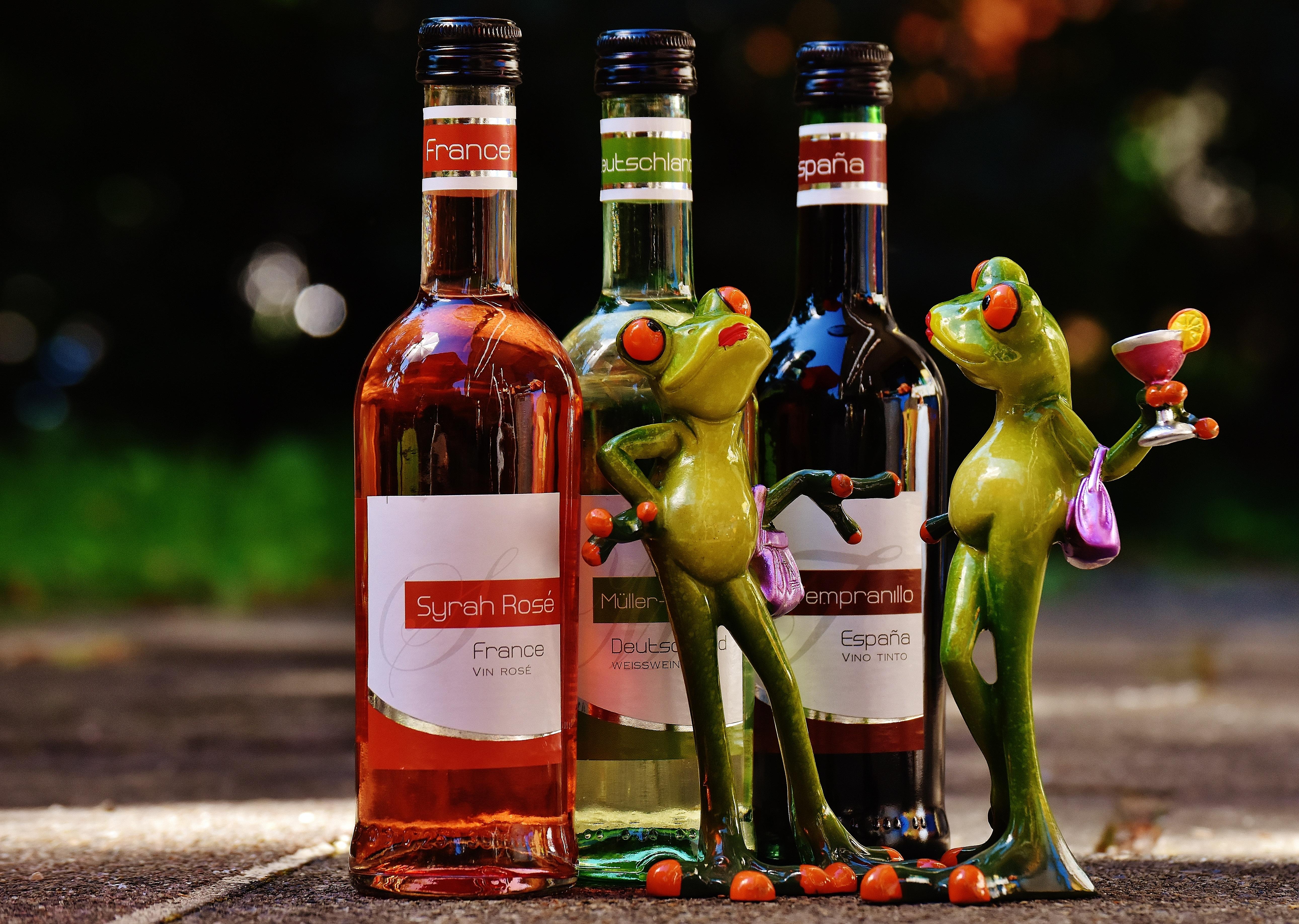 86 Gambar Anggur Merah Lucu Kekinian
