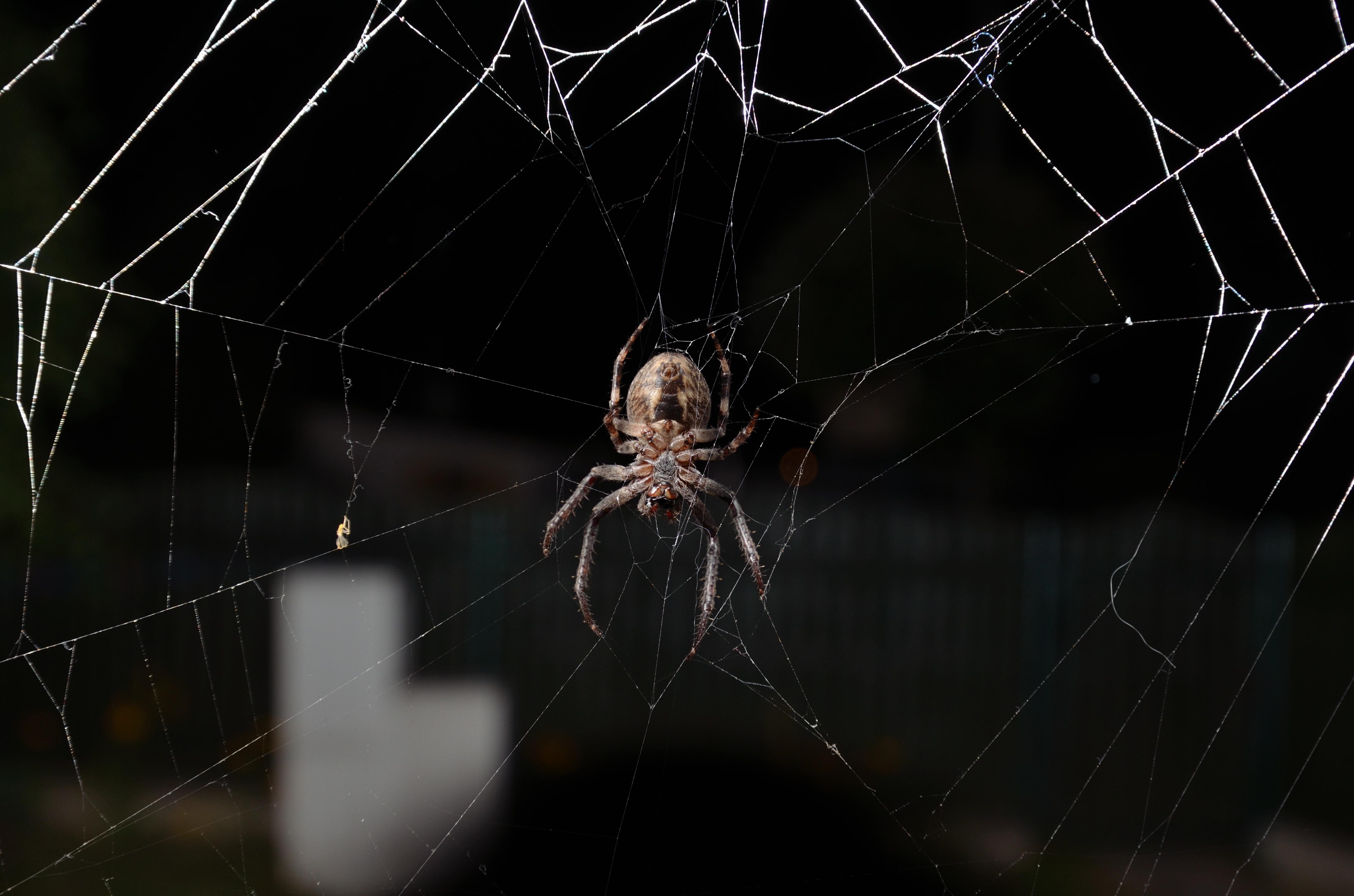 как фотографировать пауков время ленин уже