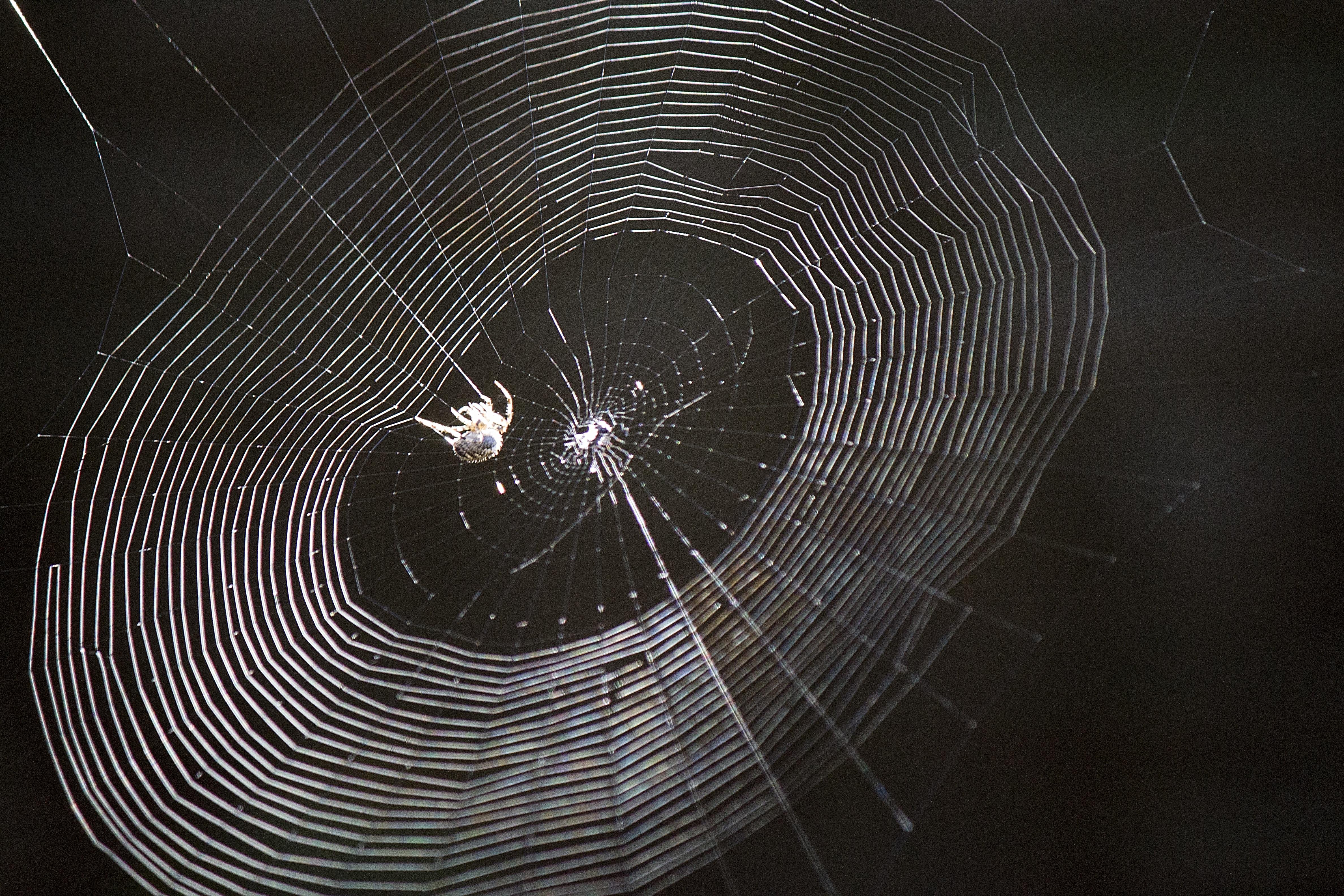 černý web