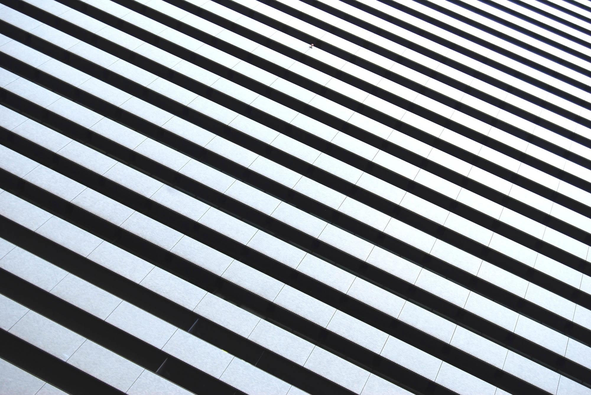 Kostenlose foto : Flügel, Schwarz und weiß, Weiß, Muster, Linie ...