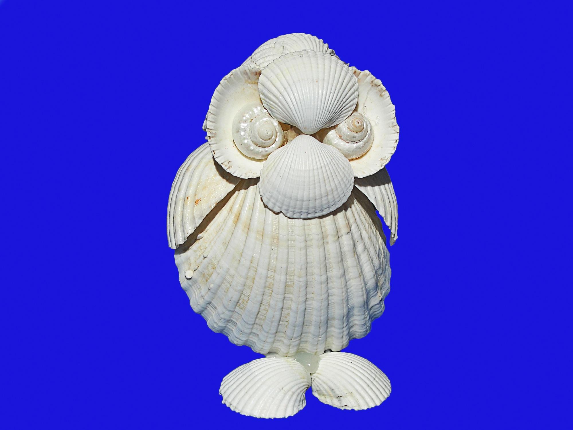 Gambar Sayap Invertebrata Kerang Laut Kulit Kerang Kerajinan