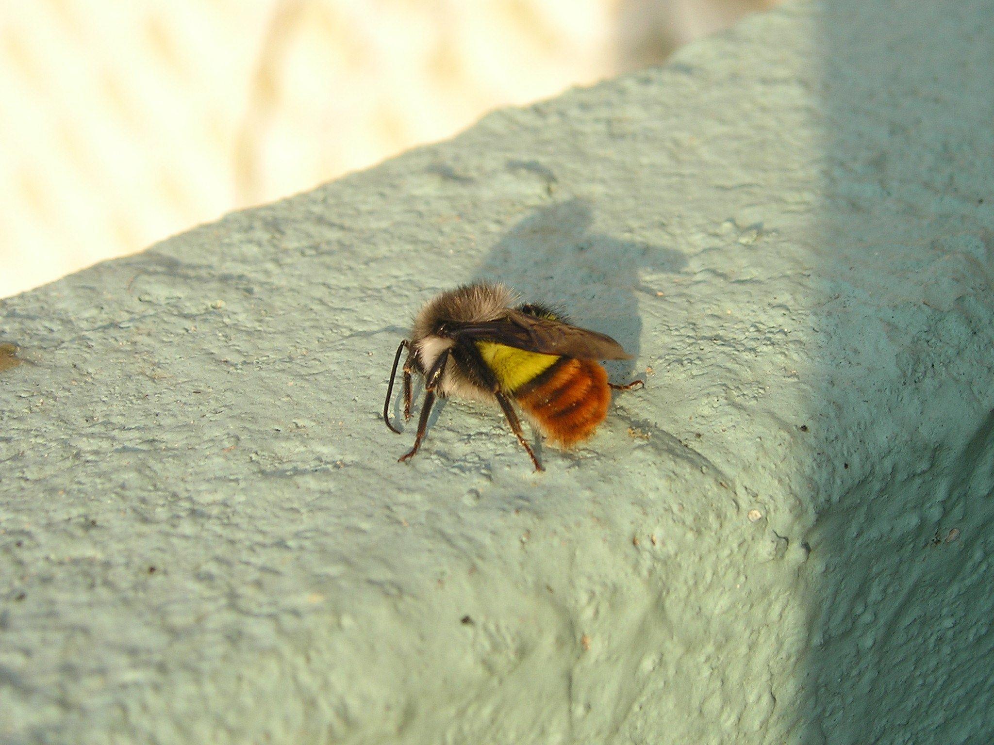 Fotos gratis  ala hoja mosca naranja insecto amarillo fauna