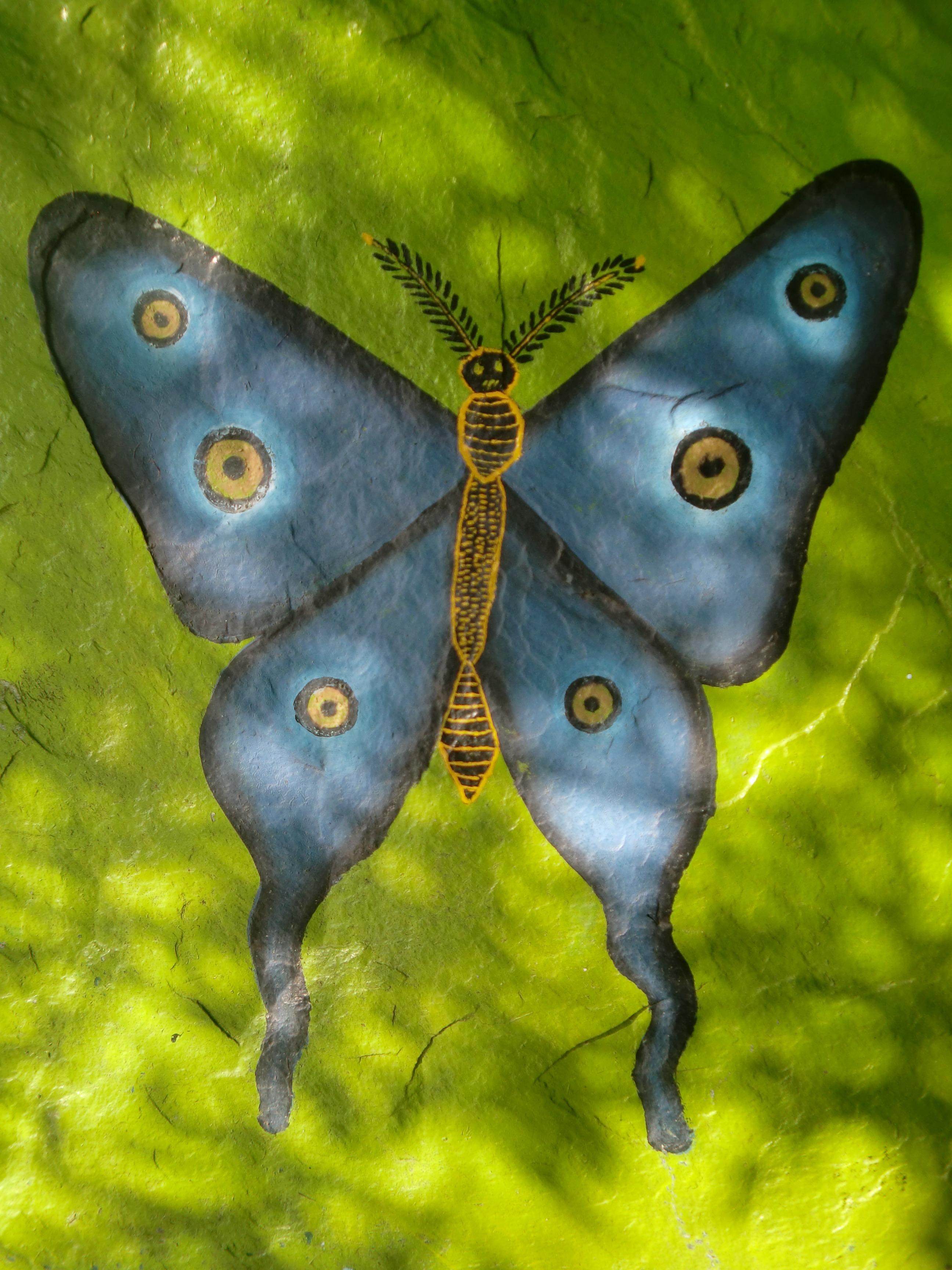Fotoğraf Kanat ışık Yeşil Böcek Mavi Güve Kelebek Fauna