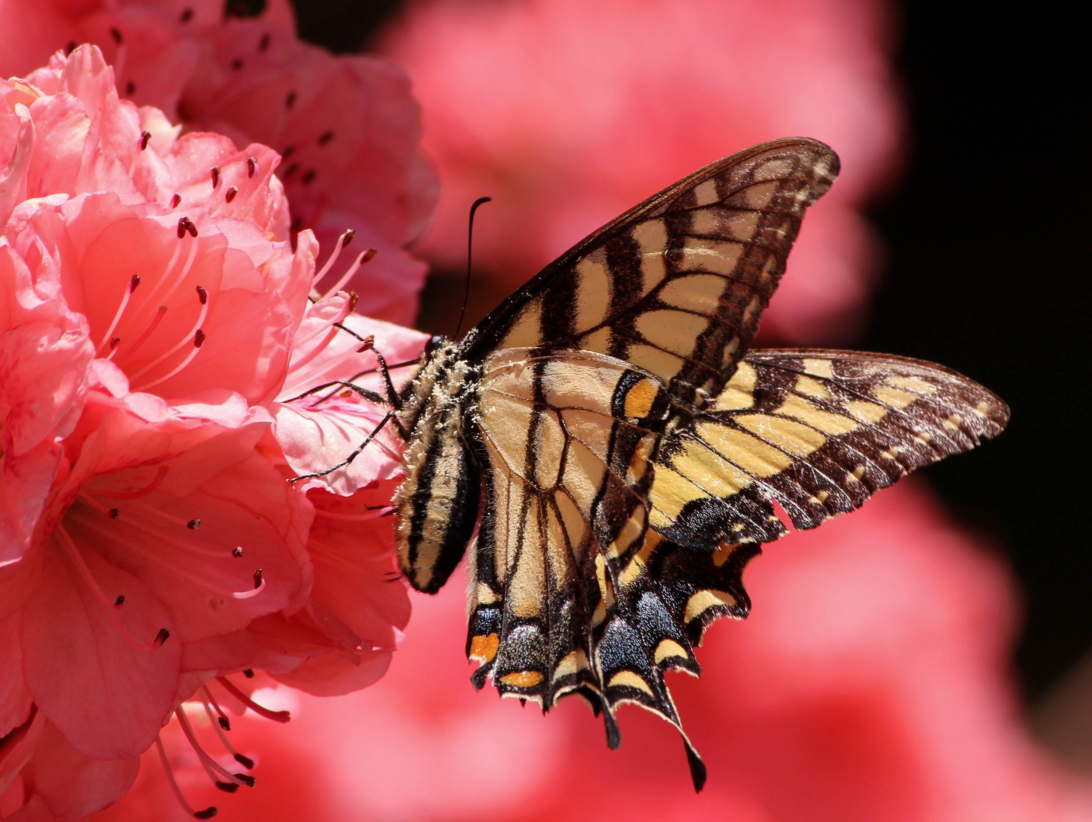 природа животные насекомое макро бабочки nature animals insect macro butterfly без смс