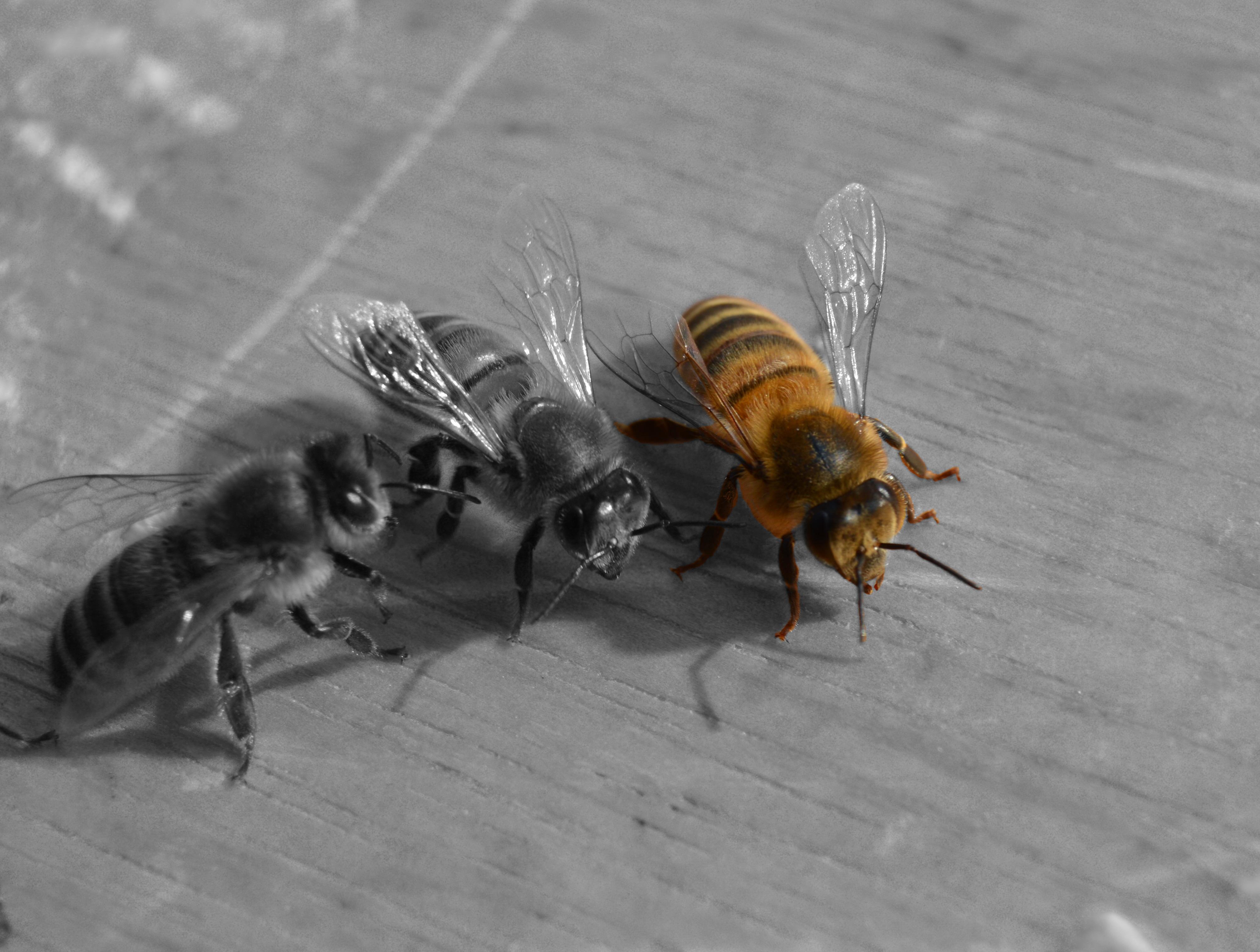 Fotos gratis  ala fotografa mosca insecto fauna
