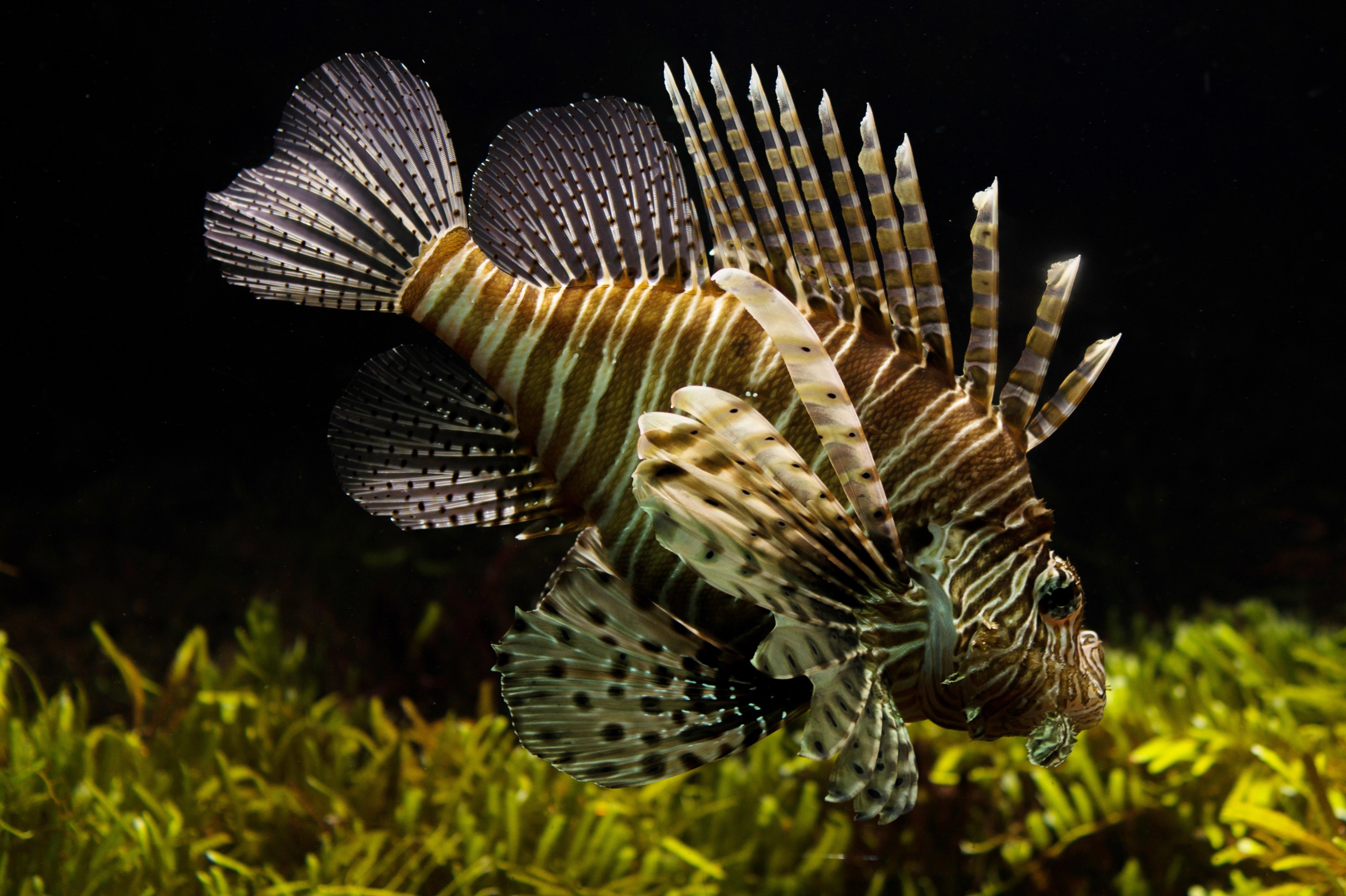Akrep ve Balıklar Uyumlu mu