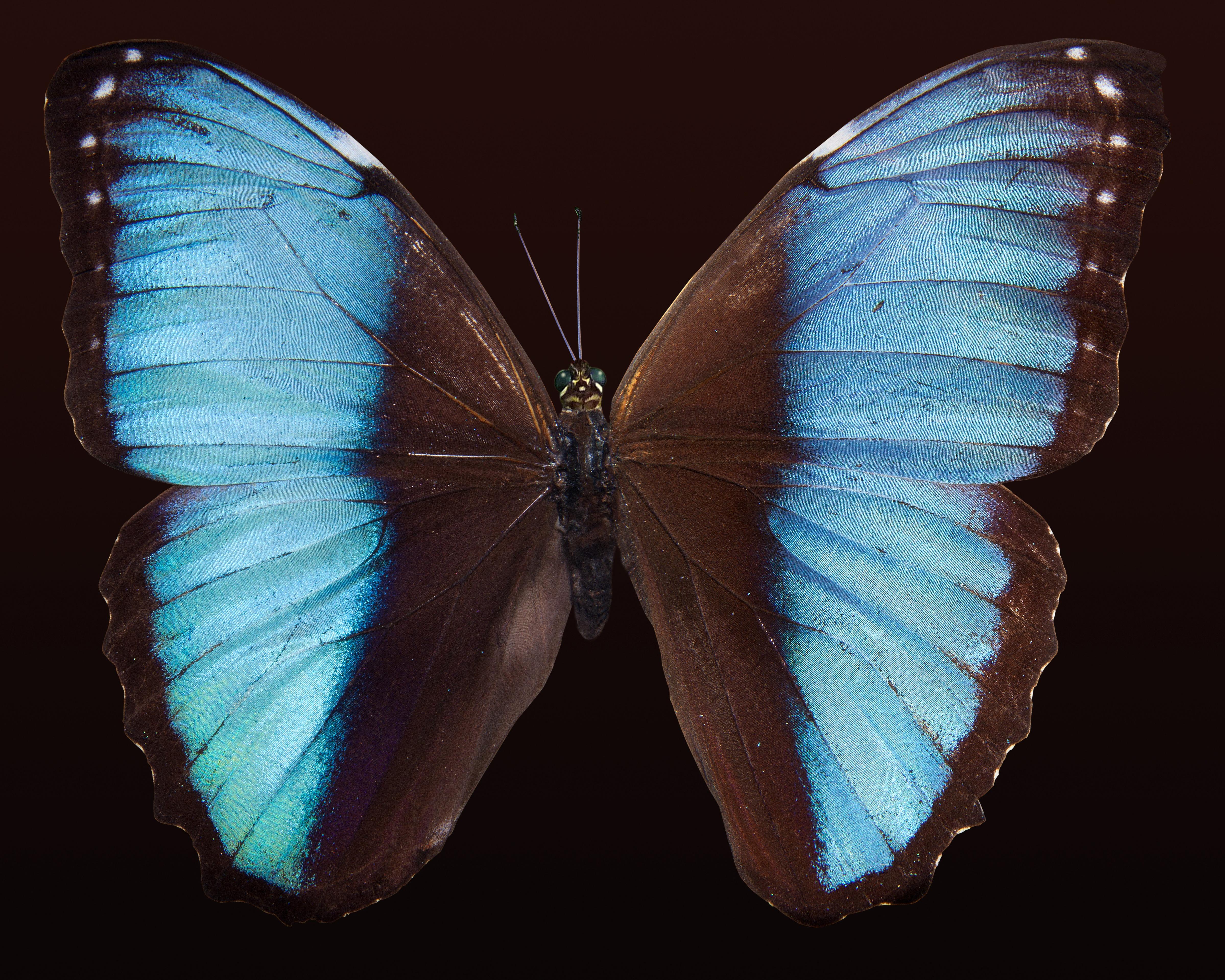 Картинка черно-синяя бабочка