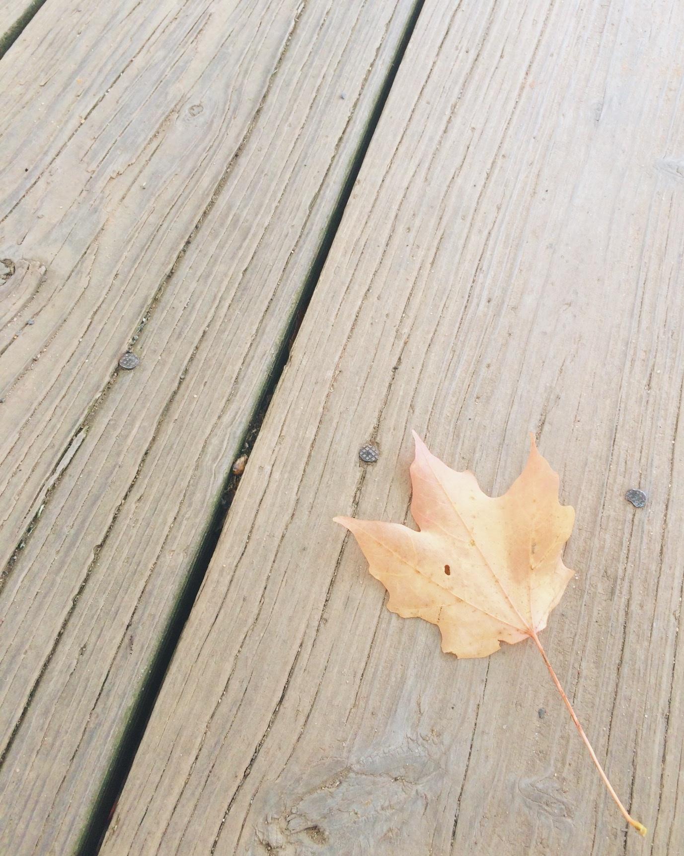 Flügel Holz Blatt Stock Hartholz Bodenbelag Sperrholz Holzboden Laminatboden