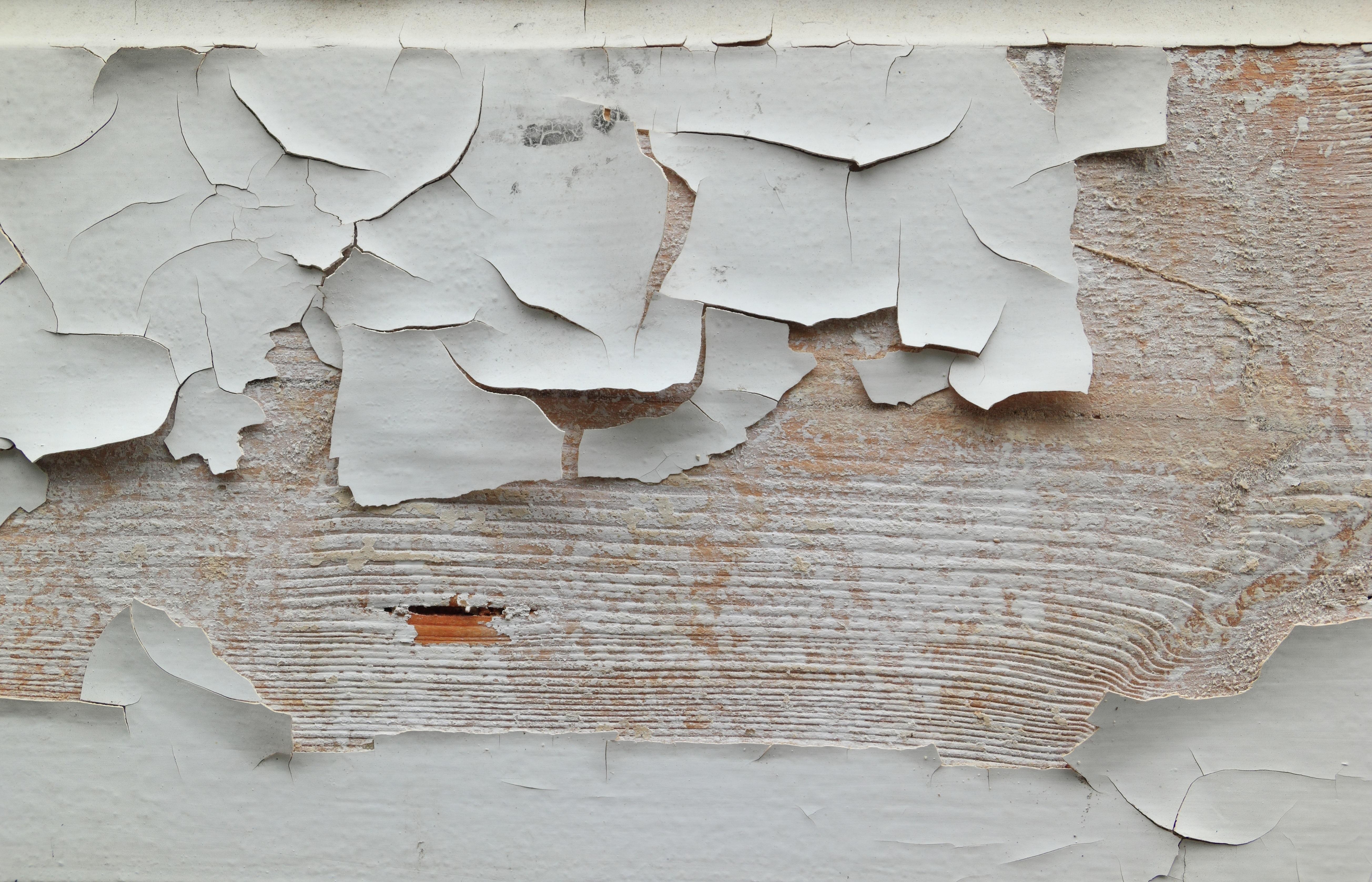 Kostenlose foto : Flügel, Holz, Weiß, Textur, Blatt, Stock, Fenster ...