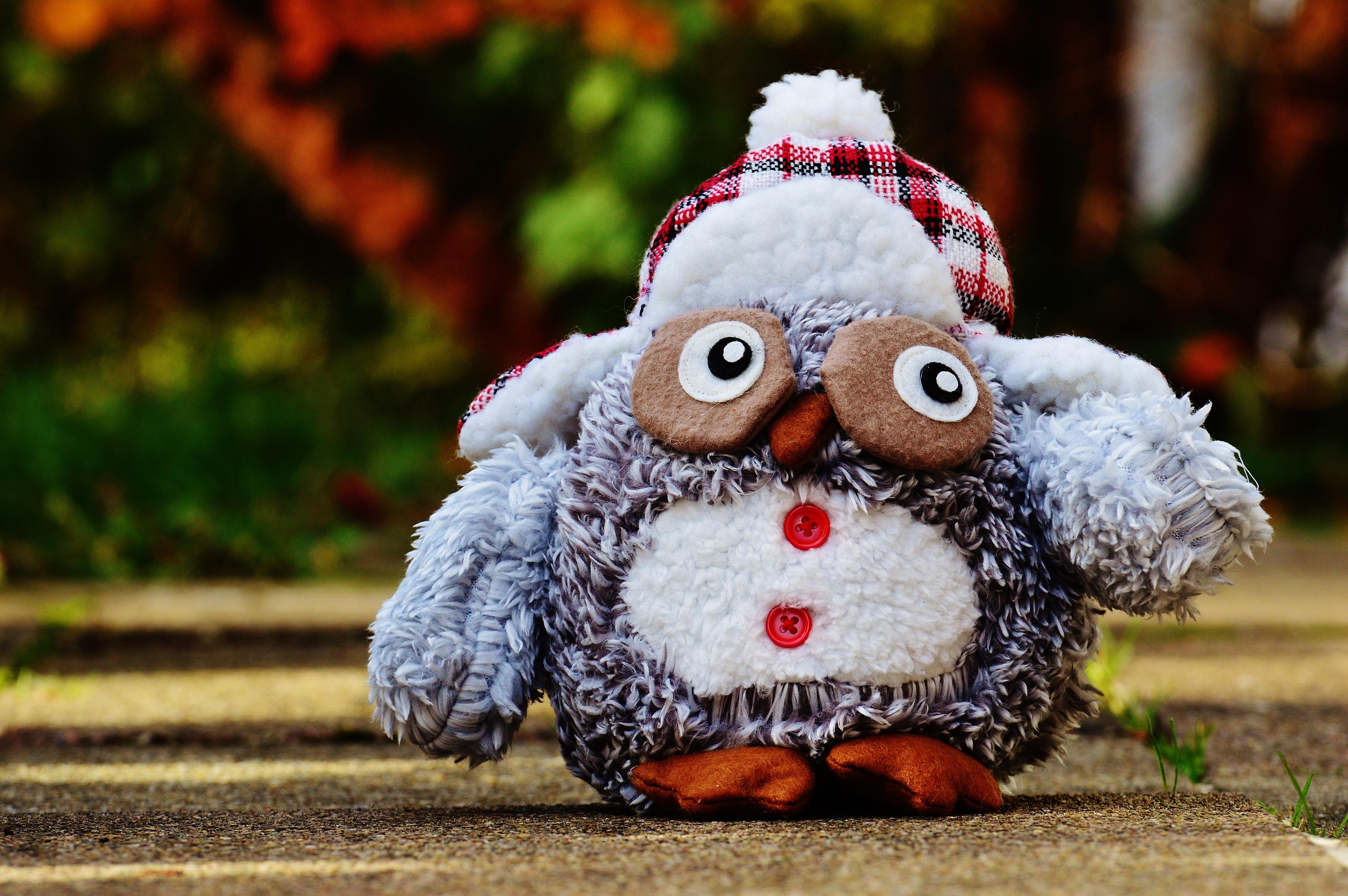 Kostenlose foto : Winter, Vogel, süß, niedlich, Dekoration, Herbst ...