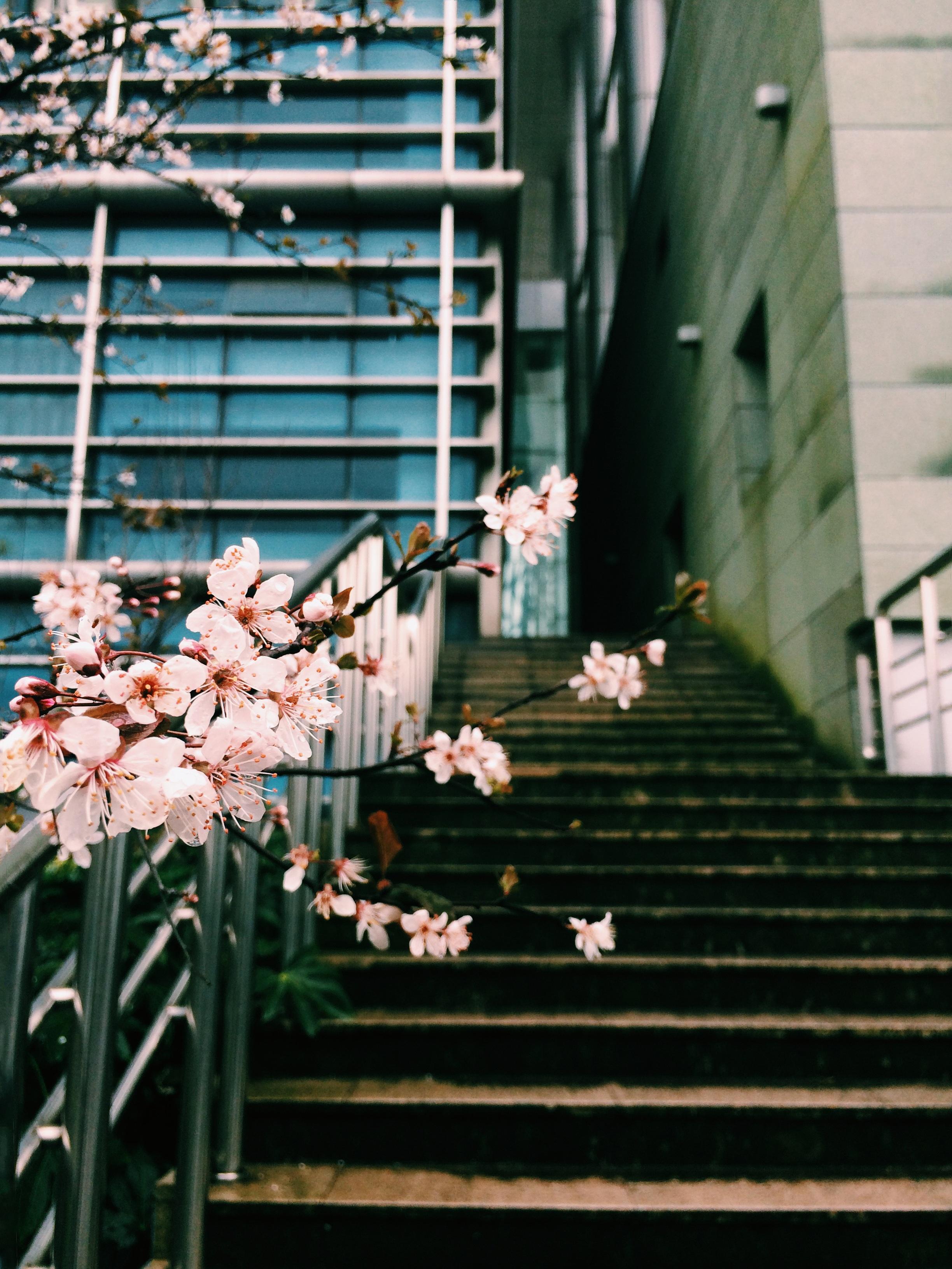 téli virág tavaszi zöld szín belsőépítészet lépcsők fénykép egyetem szilva  virág ablak burkolás f091ca808b