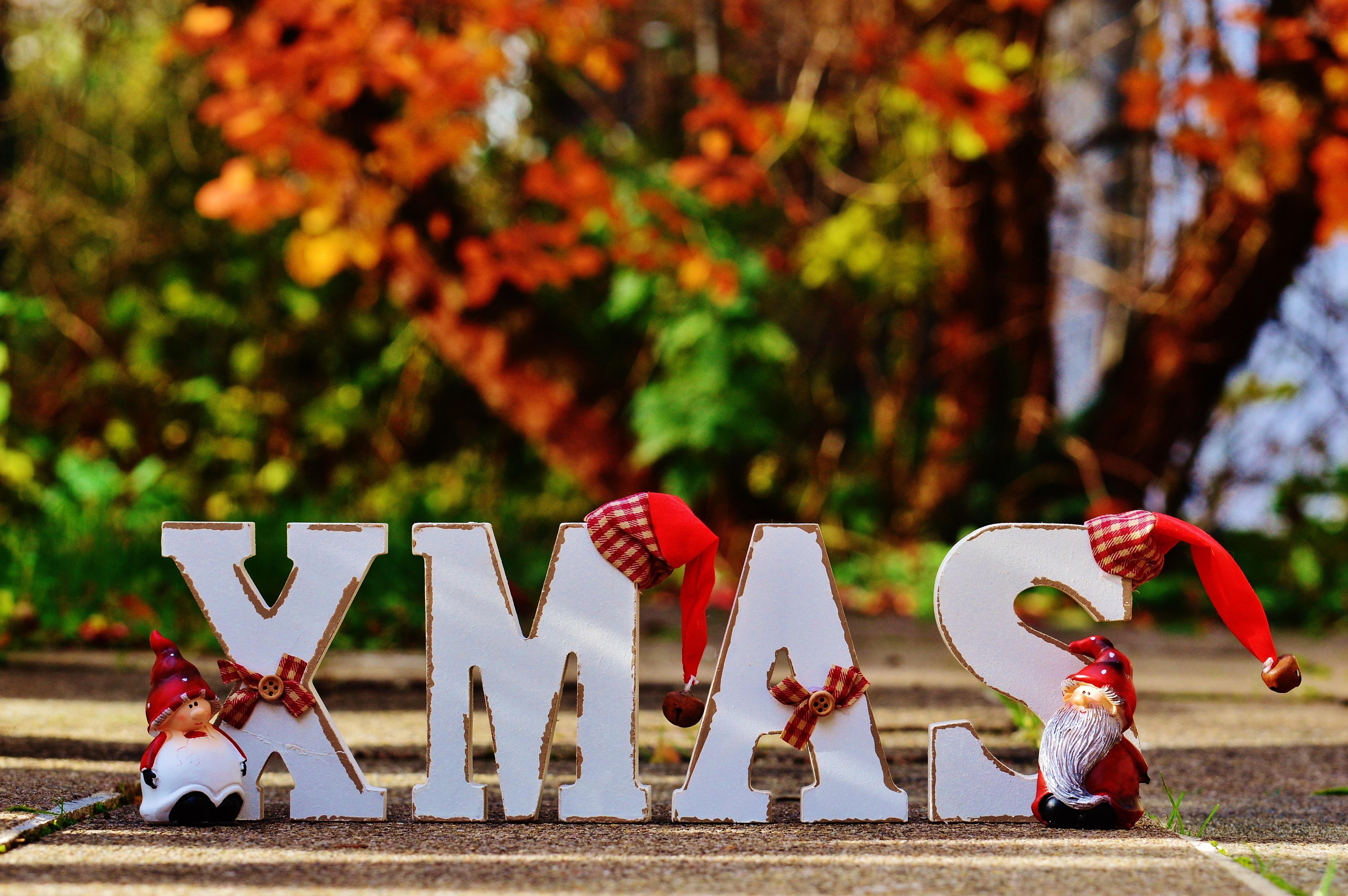 Fotos gratis : invierno, hoja, flor, decoración, primavera, rojo ...