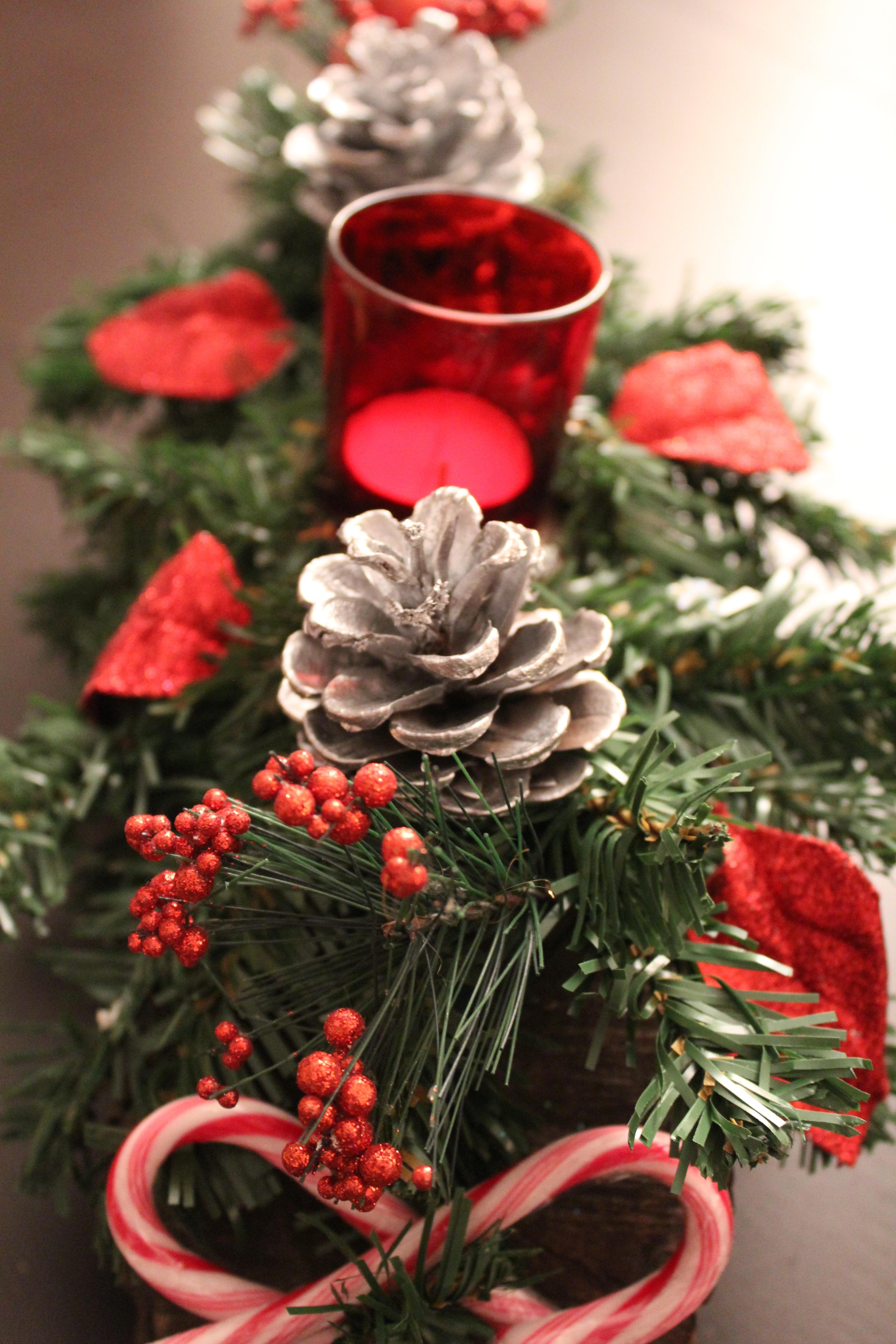 e27b71706cfd Free Images : winter, petal, foliage, green, pinecone, money ...