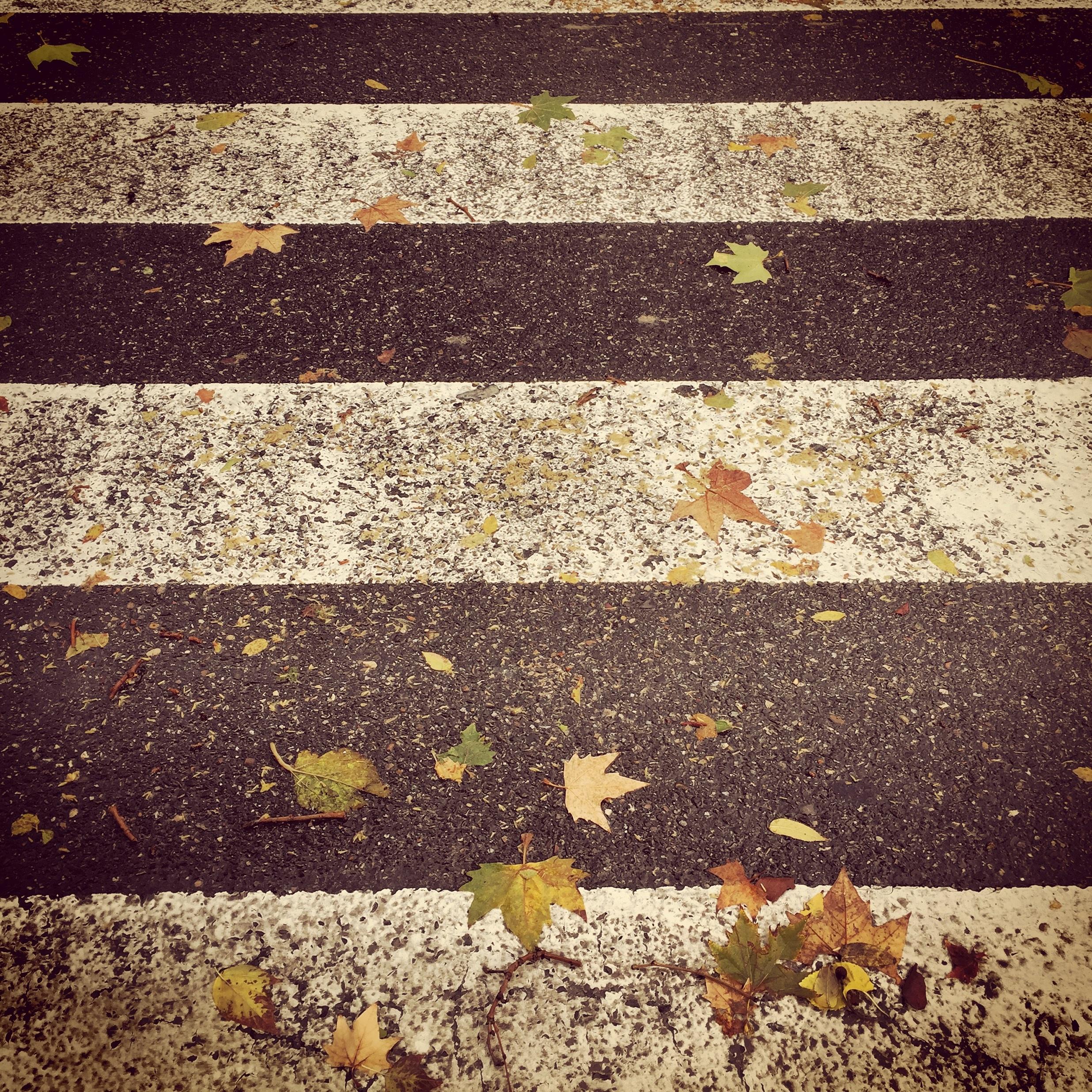 Fotos gratis invierno madera calle textura hoja for Soil yellow color