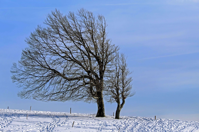 картинка дерево зимой без снега уже третий