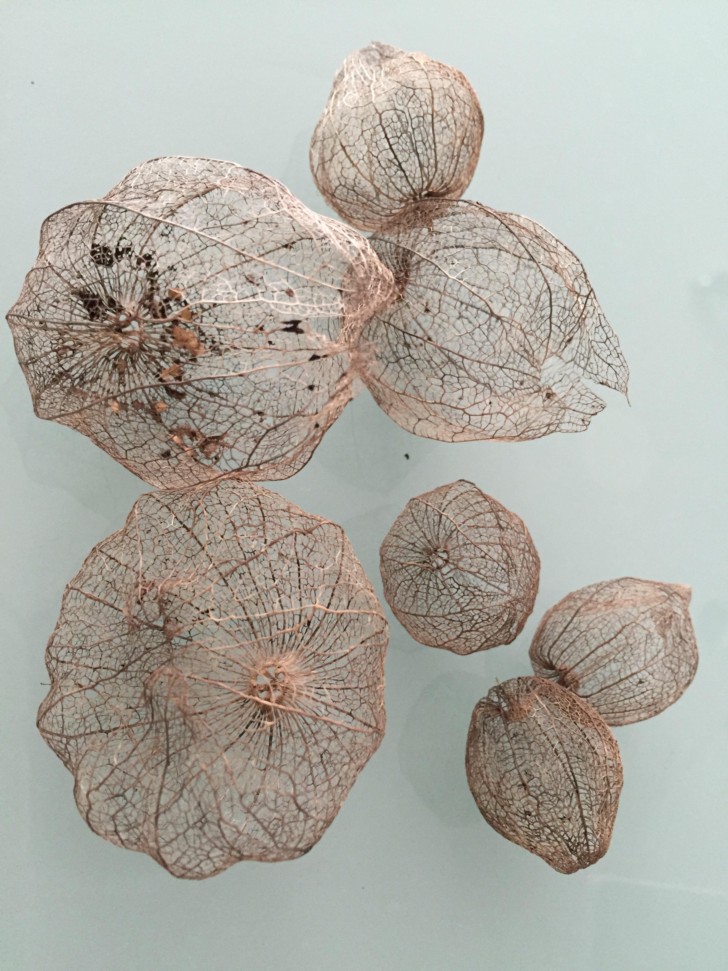 Gambar Kayu Daun Bunga Makanan Menghasilkan Bahan