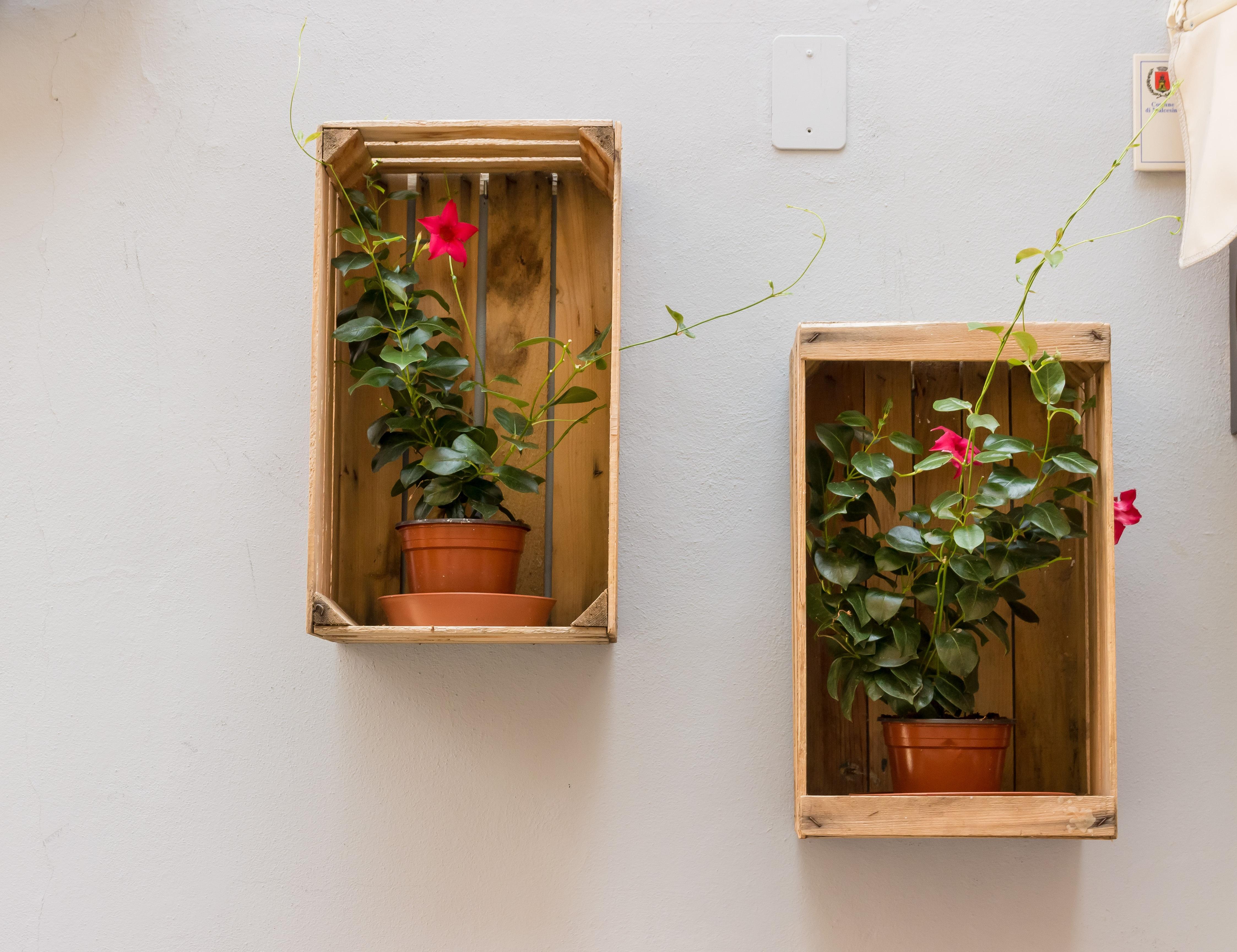 Fotos gratis : flor, ventana, pared, rústico, decoración, verde ...