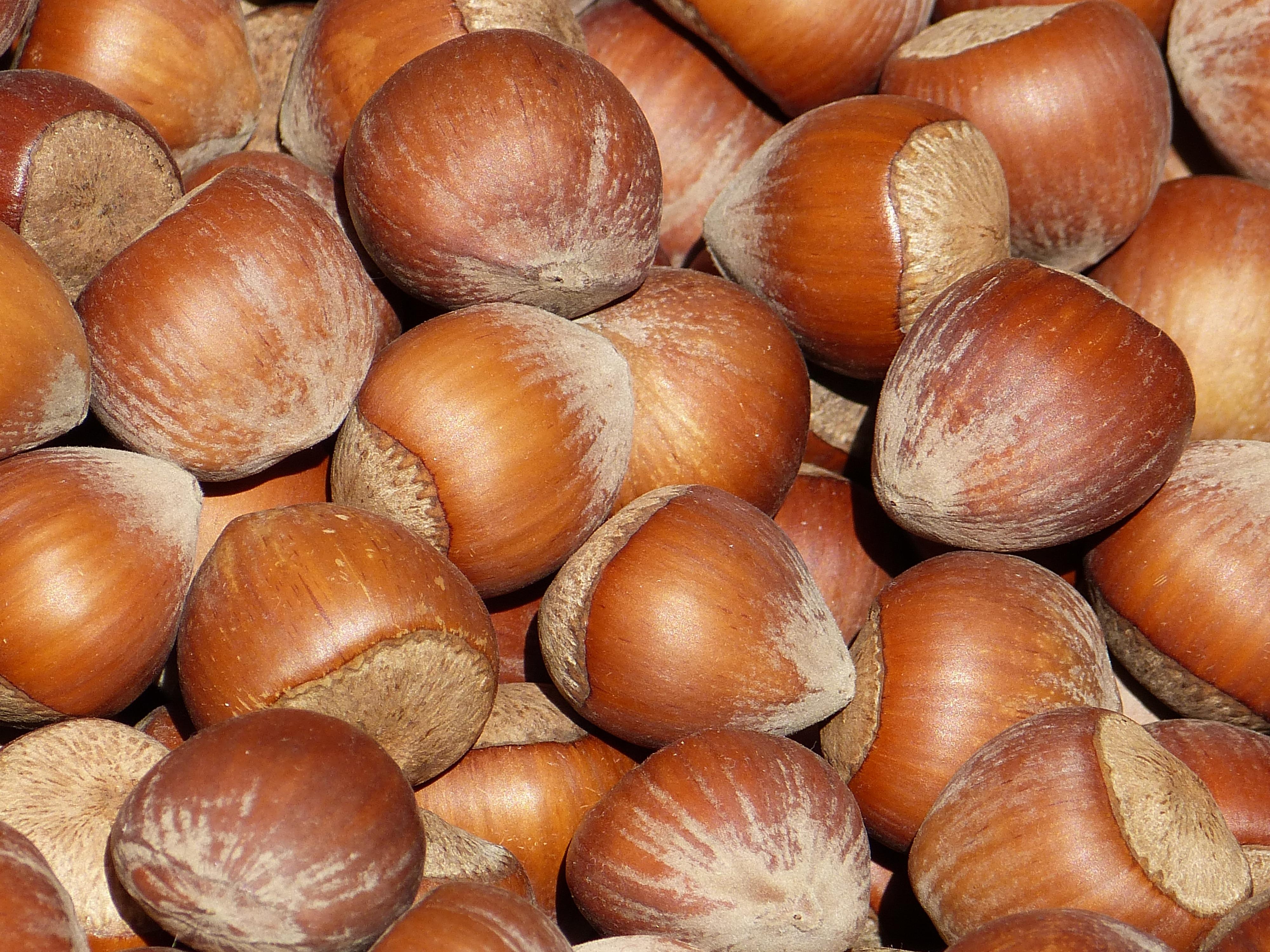 именно фото дерева ореха фундук всех гербах использовался