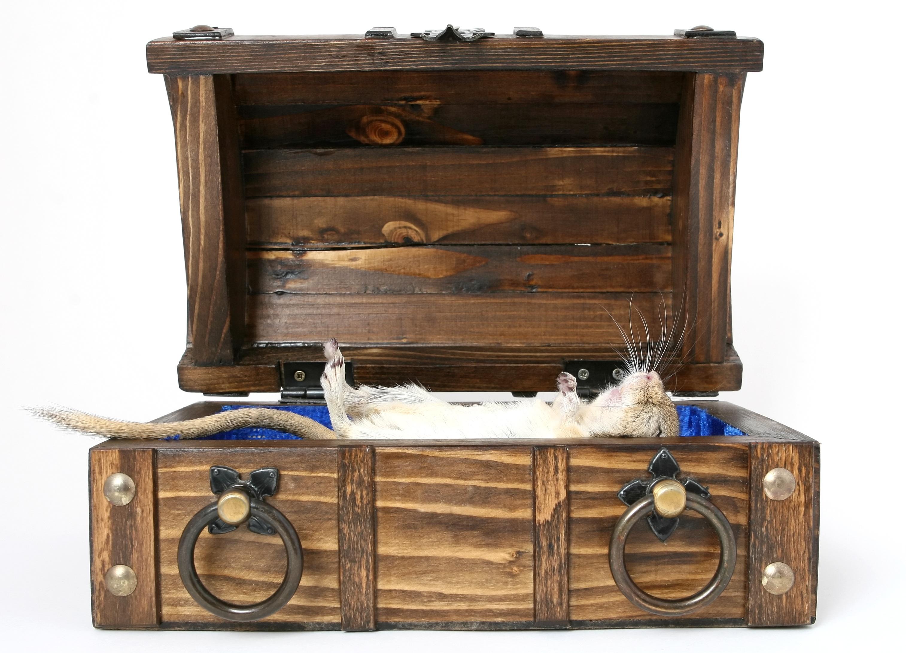 dresser leather suitcase room chs vintagelug with bed luggage vintage chest furniture brisbane drawers