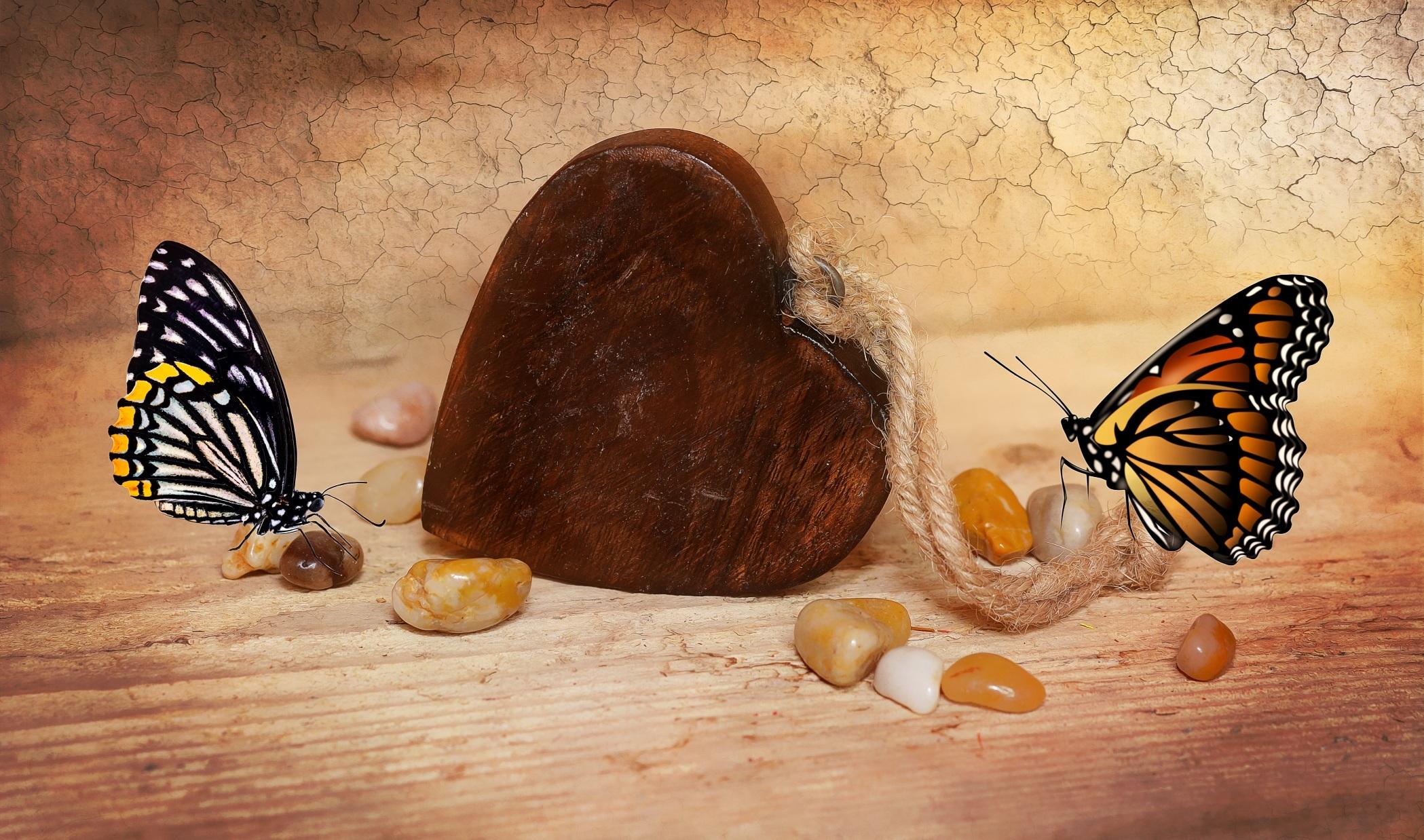 Fotos Gratis Decoraci N S Mbolo Insecto Mariposa Cerca  ~ Como Son Las Polillas De La Madera
