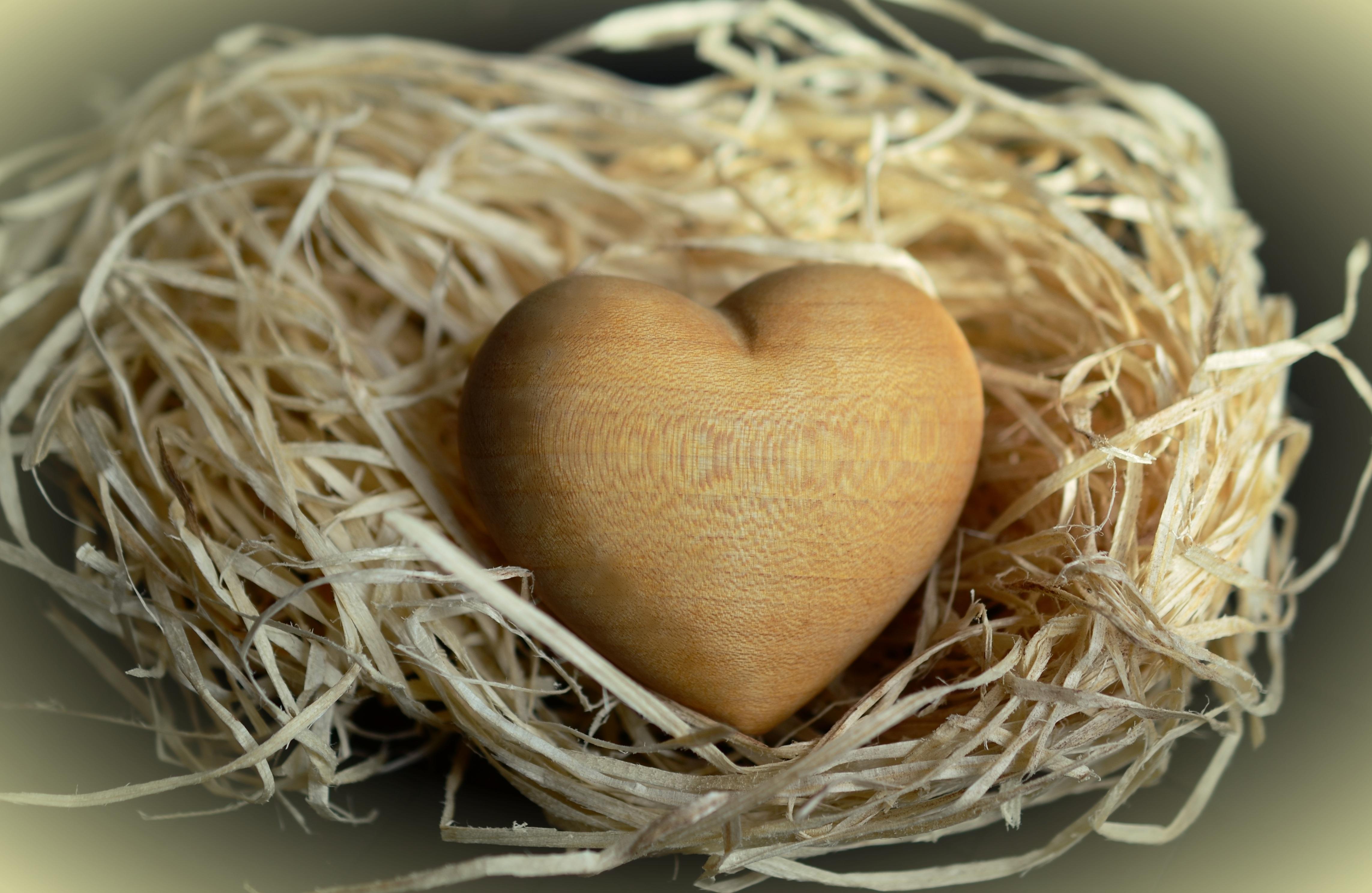 Images gratuites c ur aliments symbole agriculture cuisine oeuf noix de coco nid d - Images coeur gratuites ...