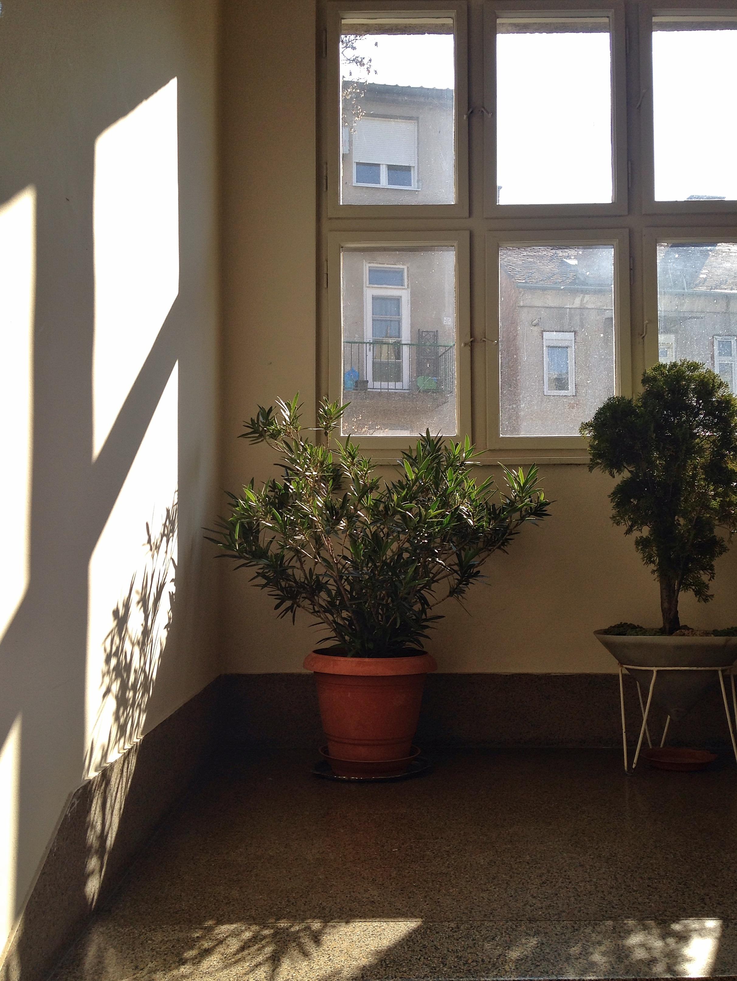 Images gratuites bois maison sol mur chalet for Conception d architecture maison gratuite