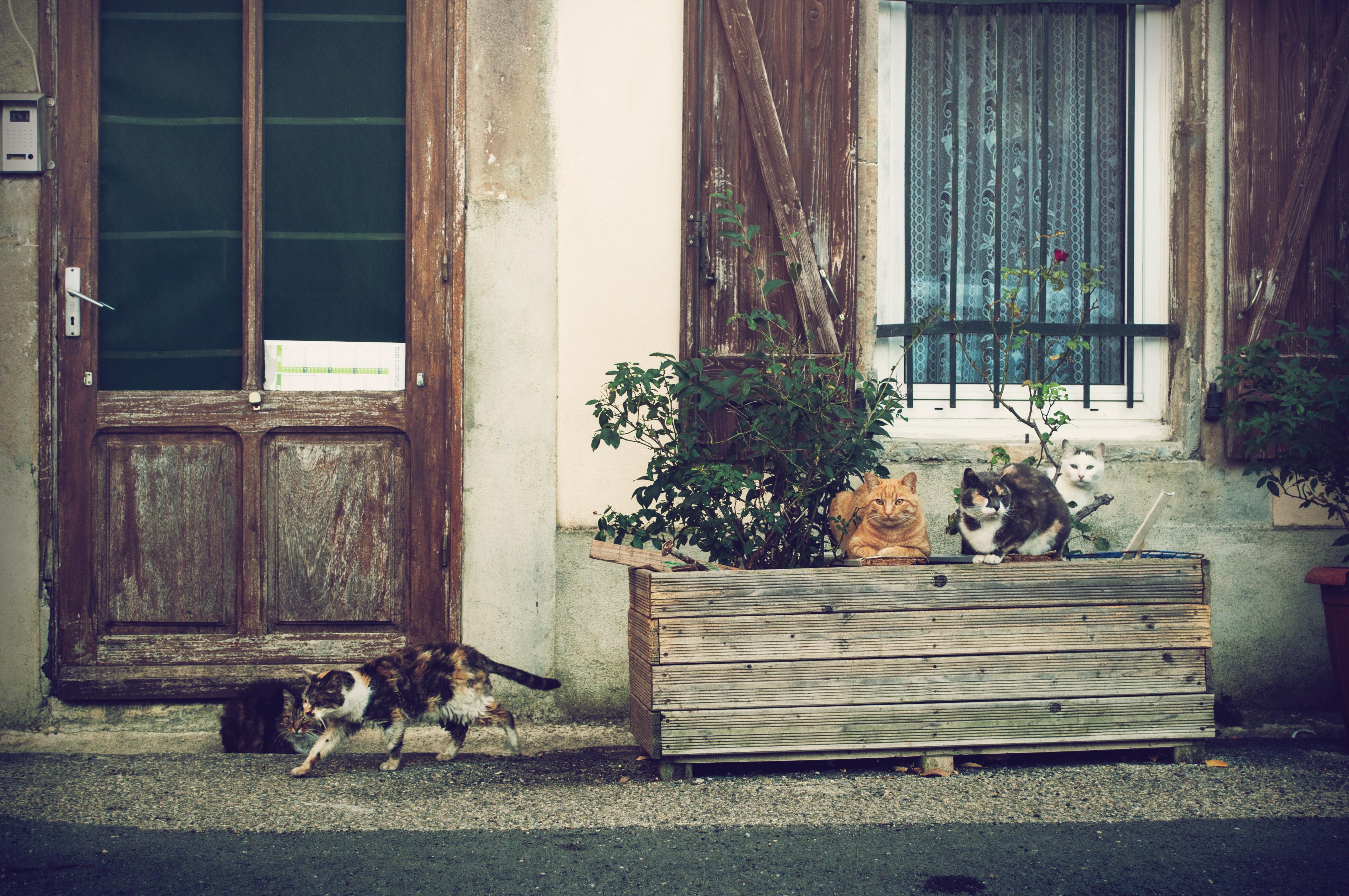 kostenlose foto : holz, haus, fenster, zuhause, tier, veranda