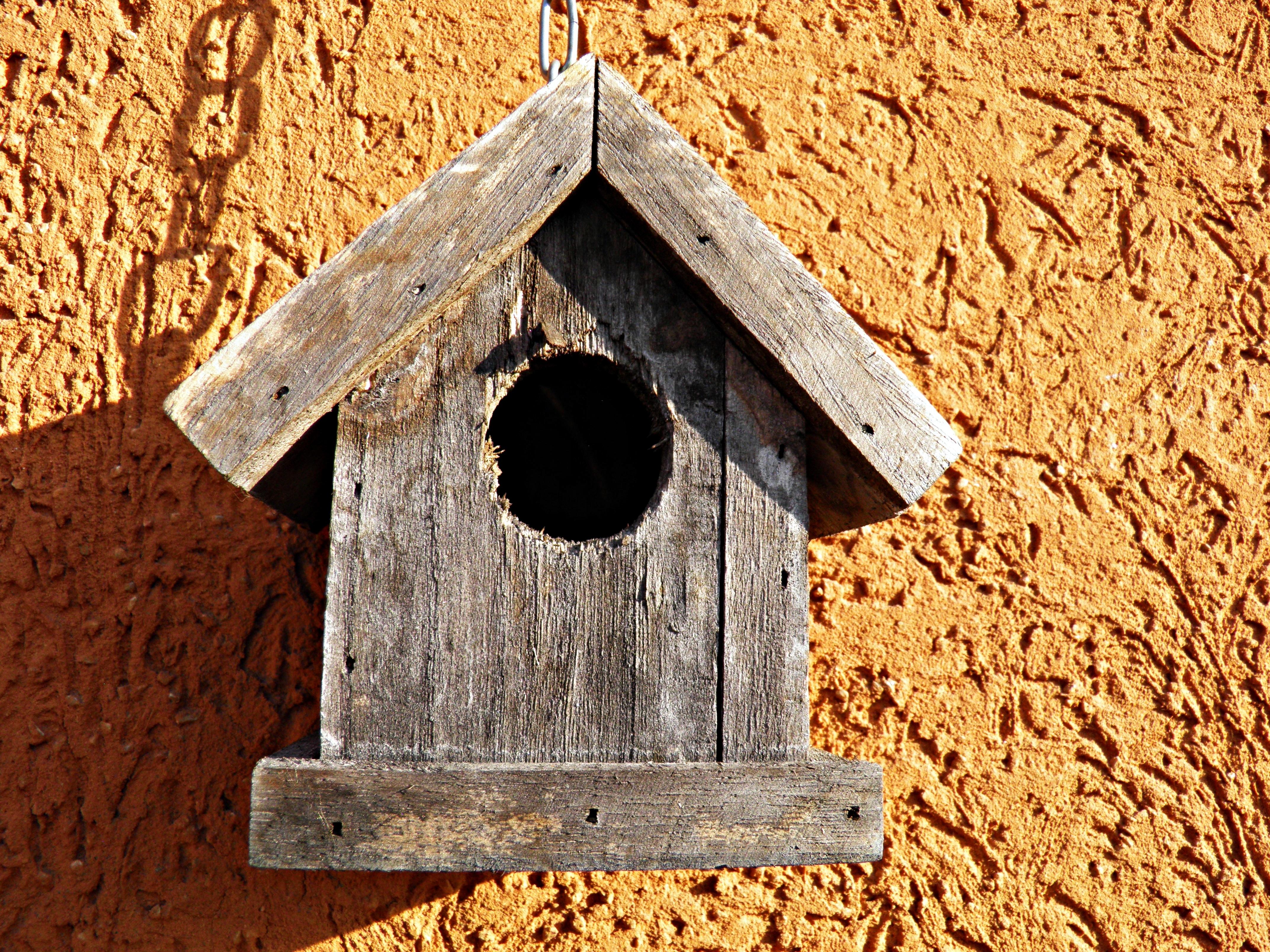 картинки дерево деревянный скворечник птичий домик
