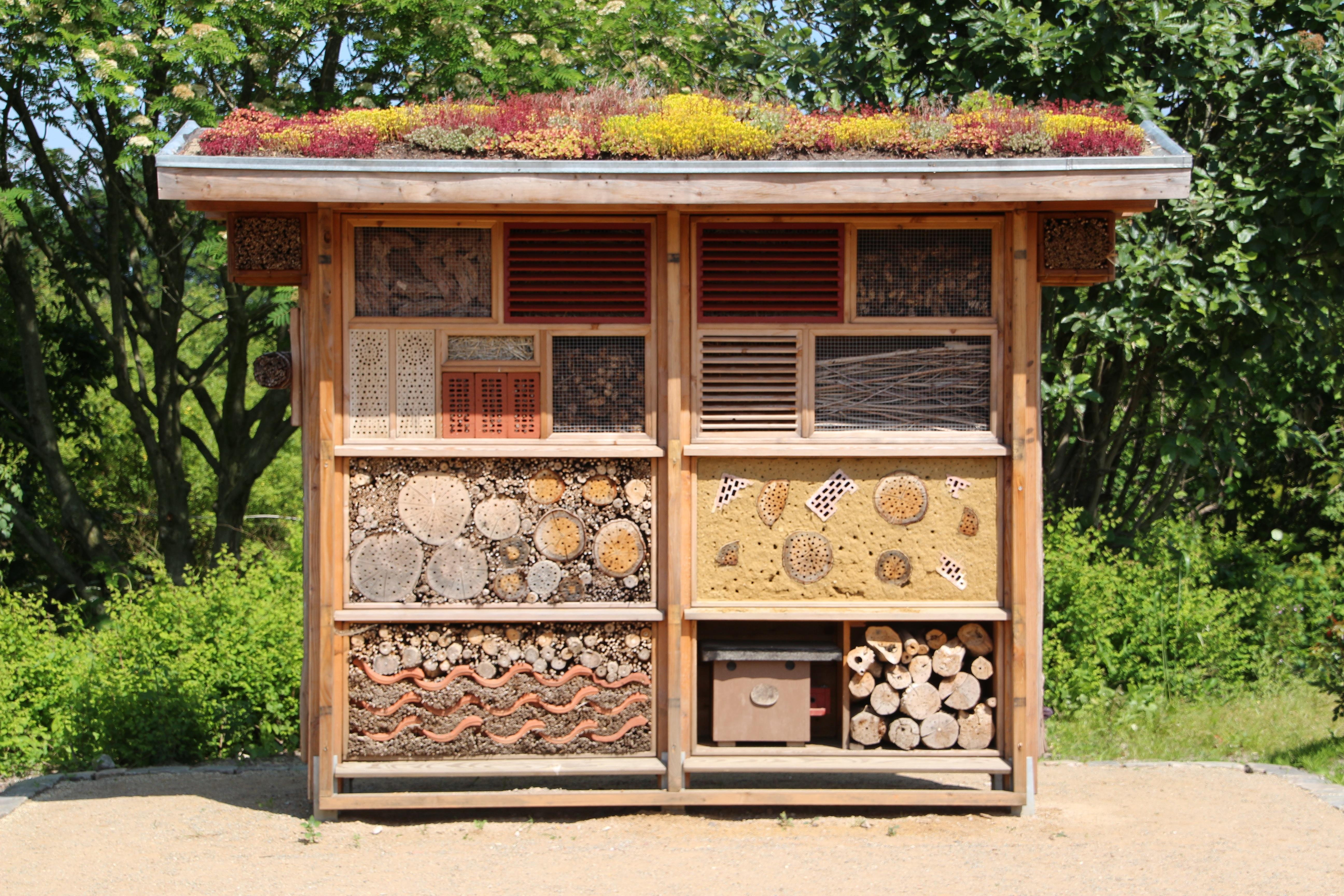 Fotos gratis : madera, insecto, mirador, mueble, Casa de insectos ...