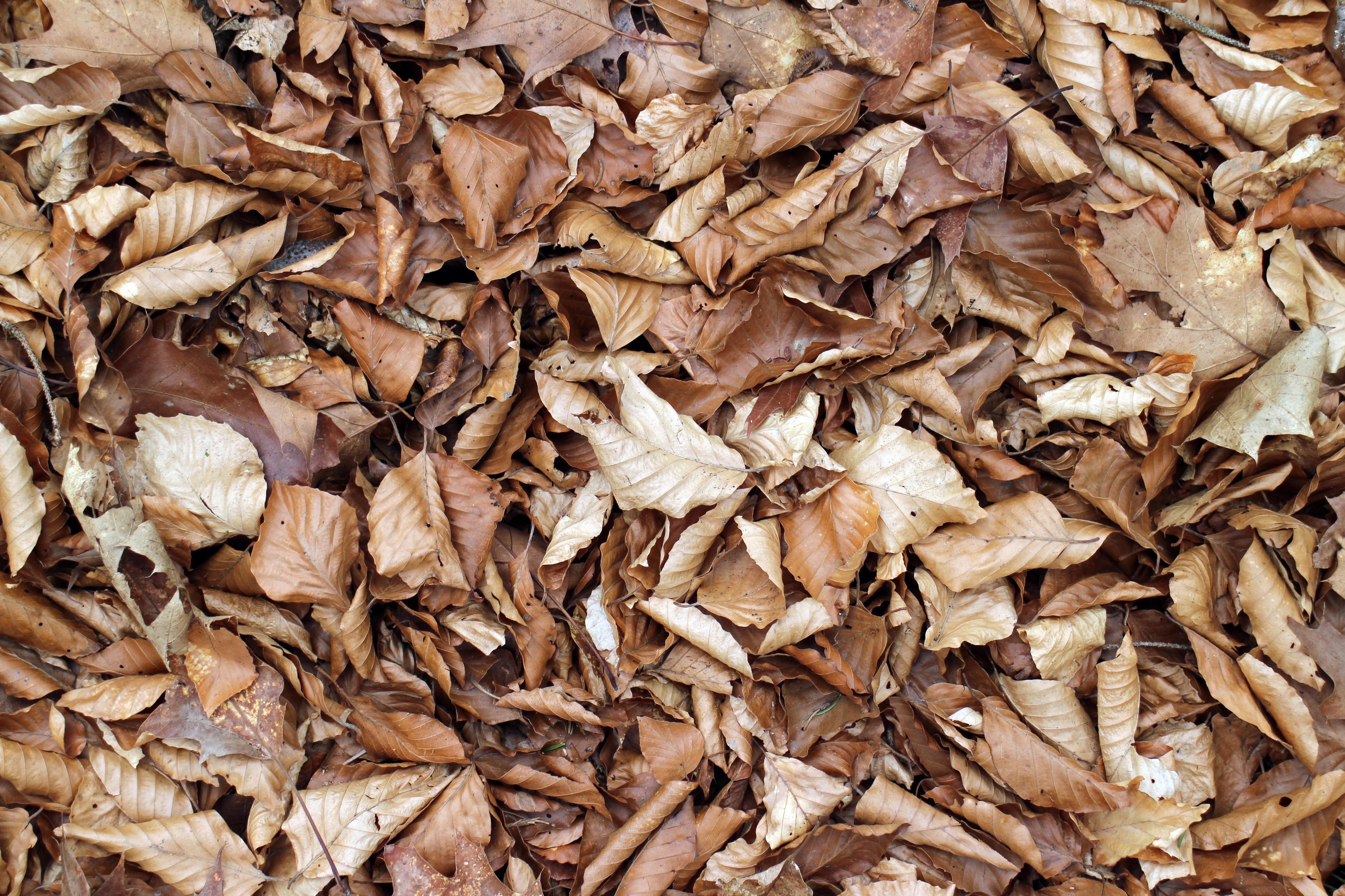Paillis Noix De Coco images gratuites : bois, feuille, fleur, repas, aliments
