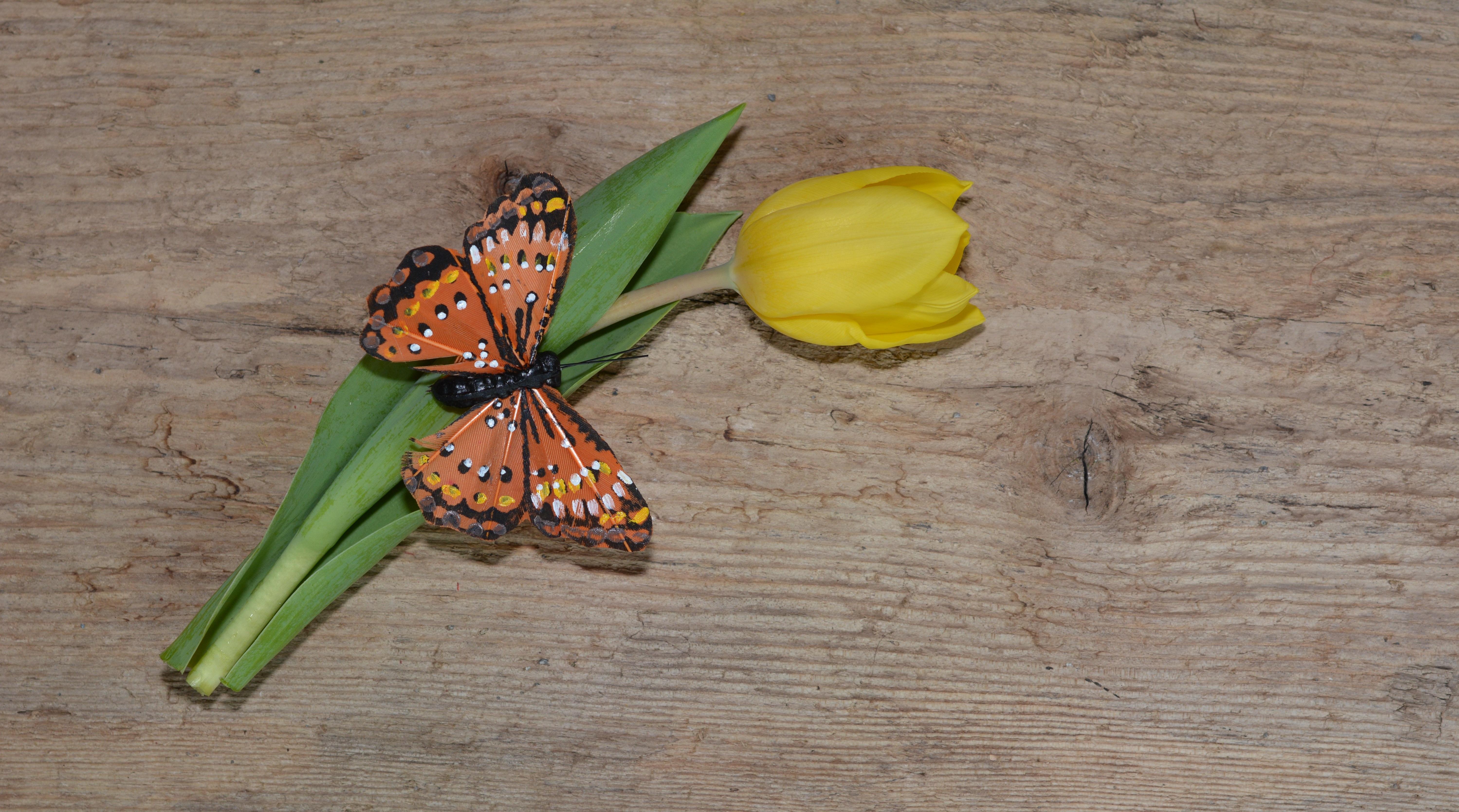 Fotos Gratis Madera Hoja Tulip N Verde Insecto Mariposa  ~ Como Son Las Polillas De La Madera