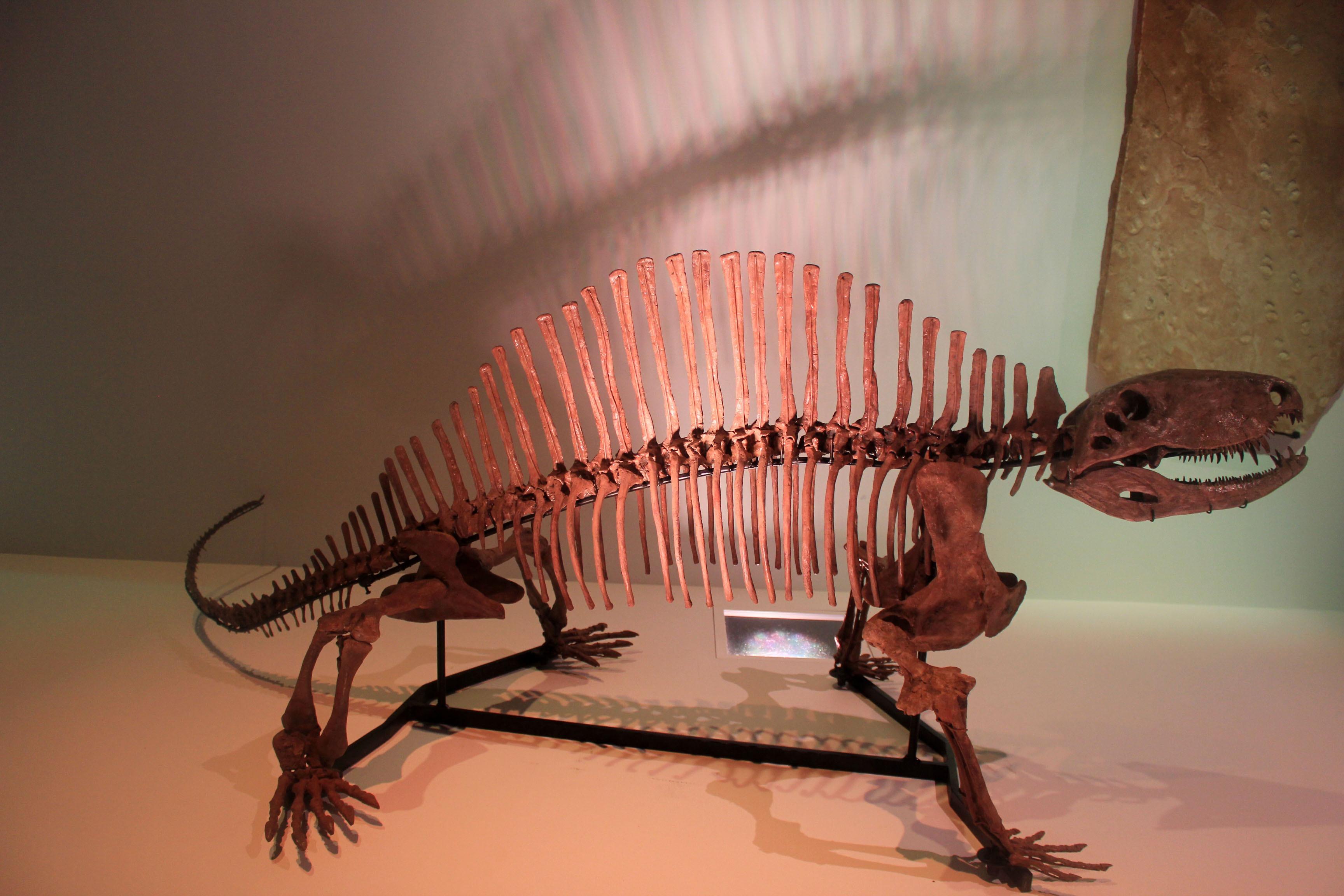 Картинки про всех скелетов динозавров