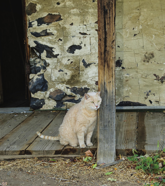 Starý šedá čierna mačička