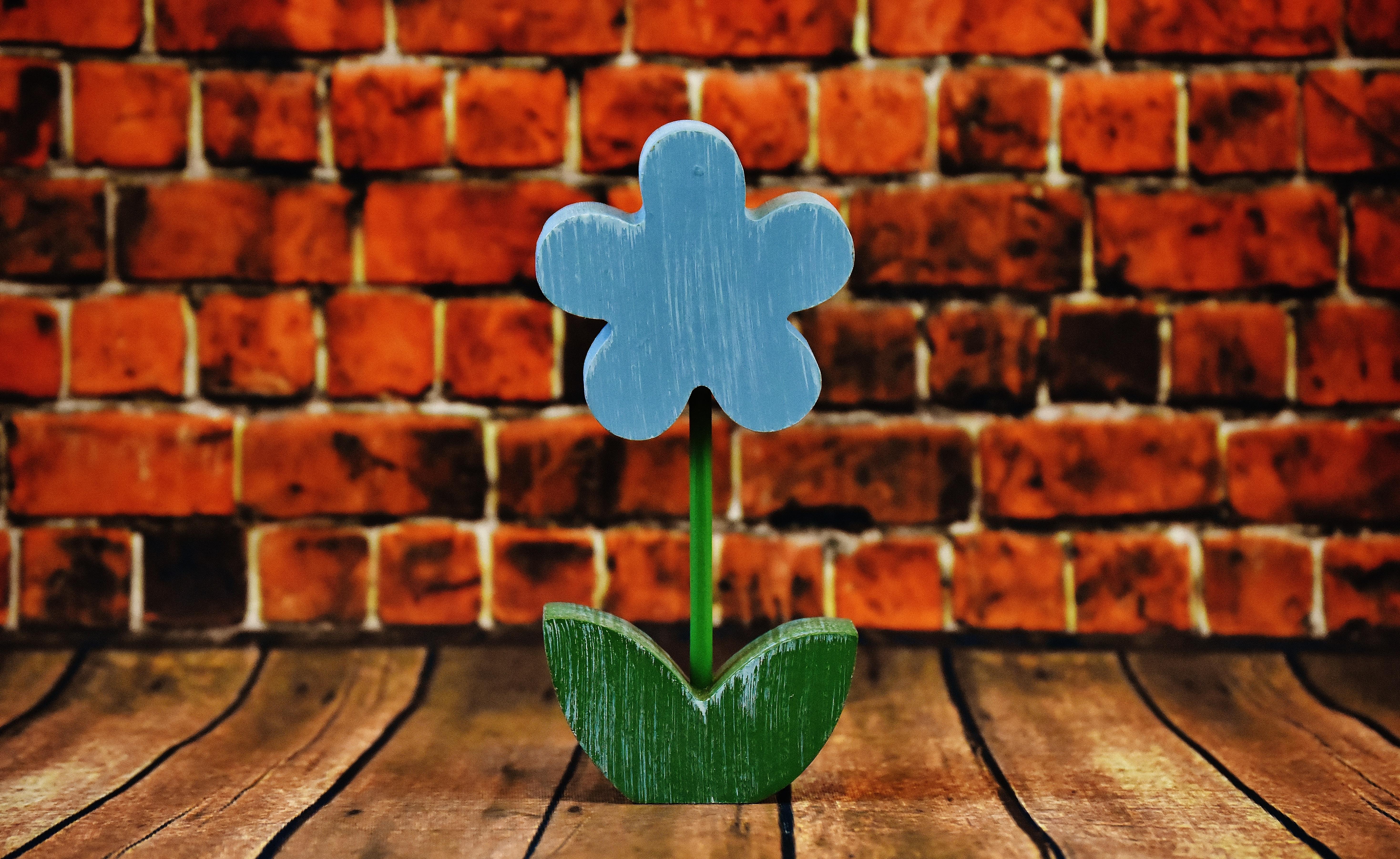 Kostenlose foto : Holz, Textur, Blatt, Blume, Mauer, Frühling, rot ...