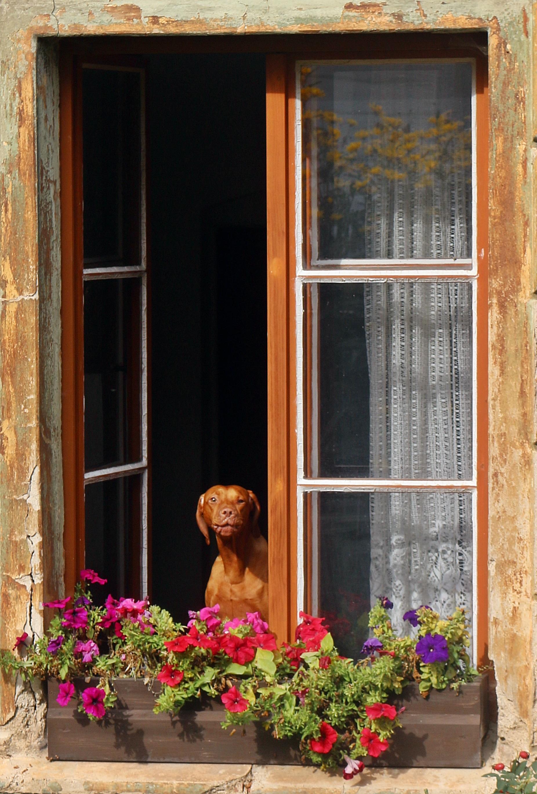 images gratuites bois maison cabanon porche balcon chalet arri re cour fa ade porte. Black Bedroom Furniture Sets. Home Design Ideas