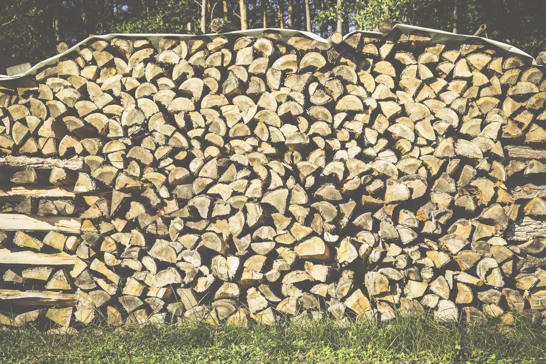 Stor Bildet : arbeid, skog, tre, blad, vegg, Logg, jord, botanikk DM-78