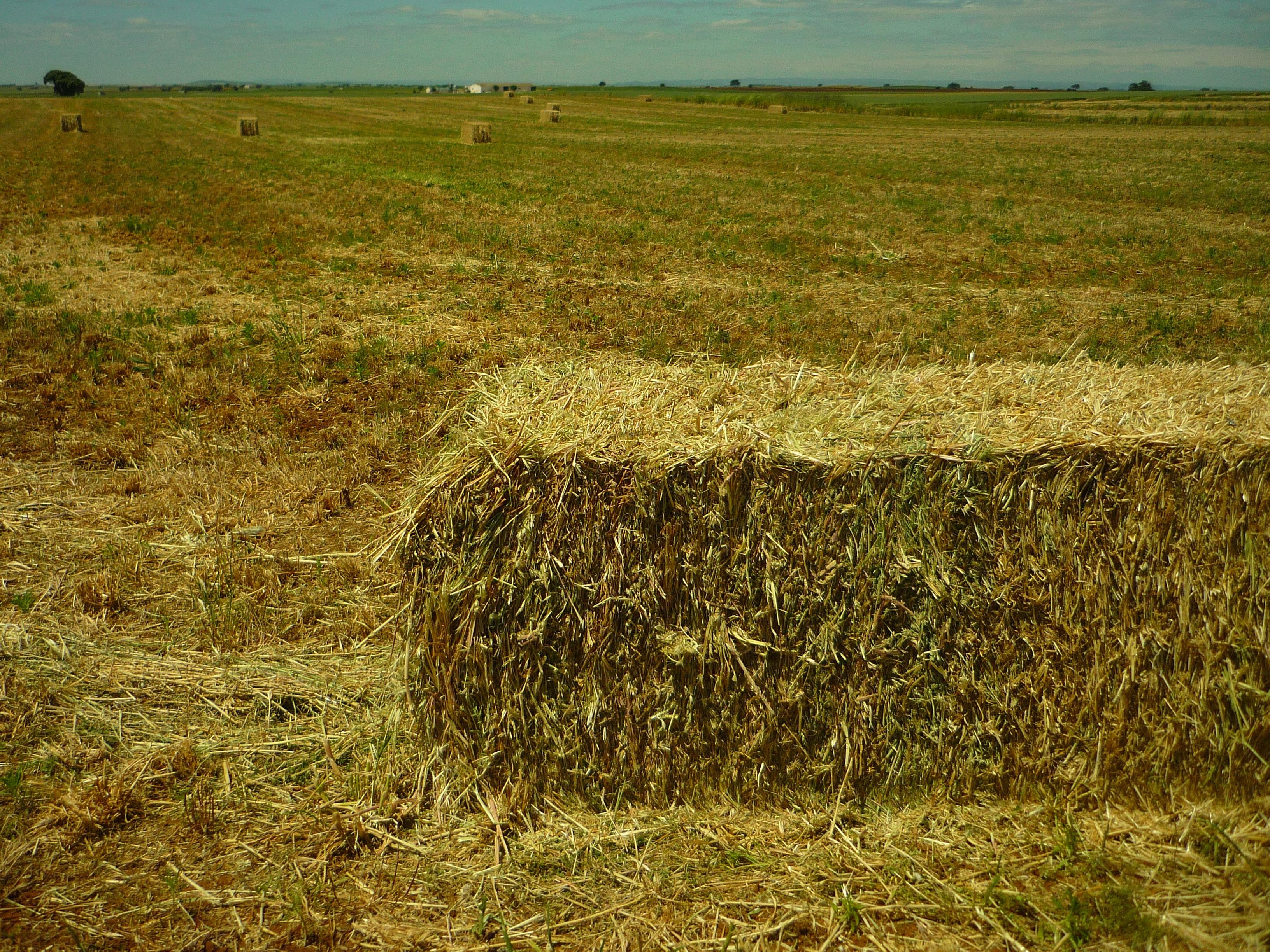 Fotos gratis : trabajo, césped, pantano, planta, heno, campo, granja ...
