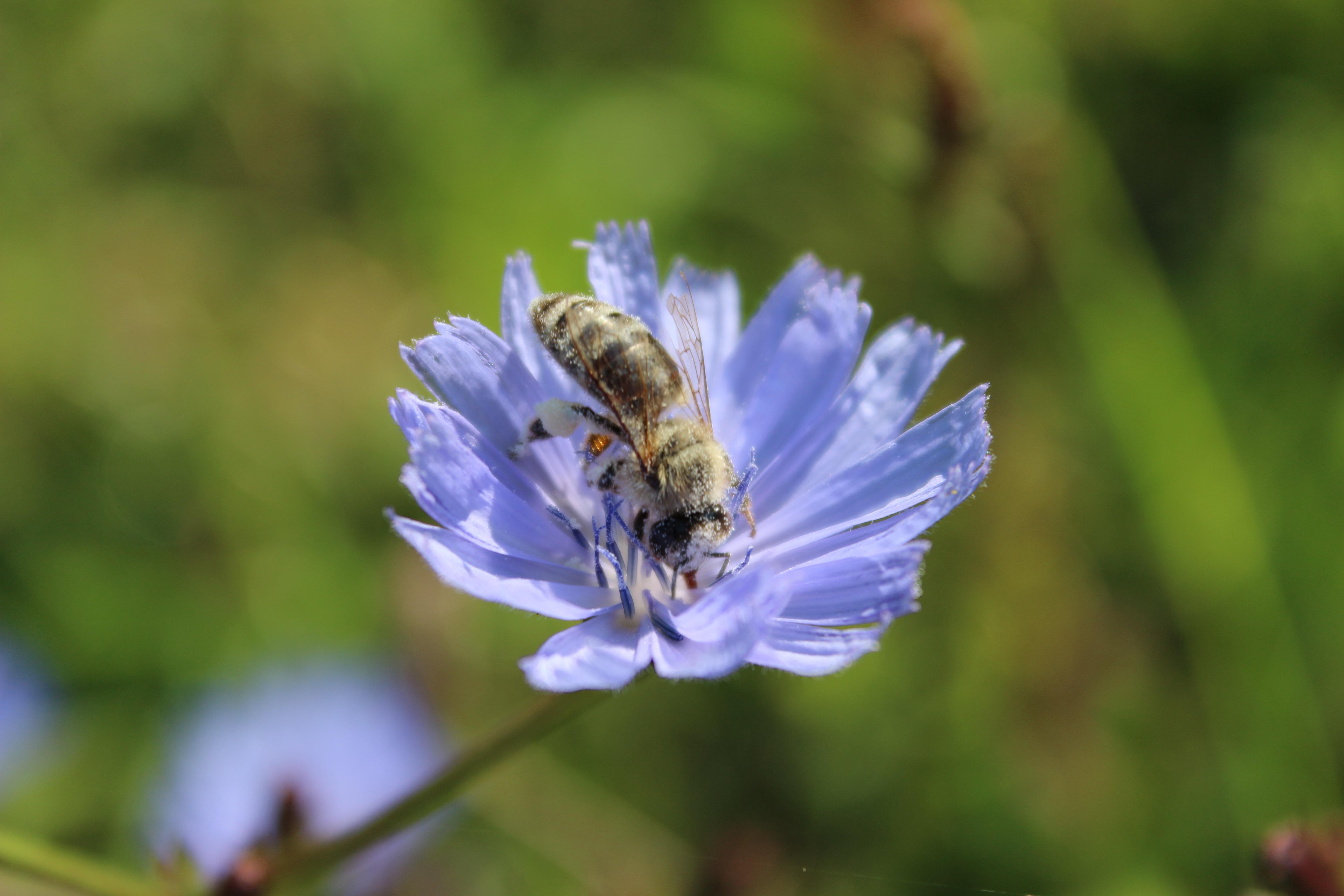 Free Images Nature Blossom Meadow Flower Petal Pollen Spring Herb Produce Botany Garden Closeup Flora Fauna Invertebrate Wildflower