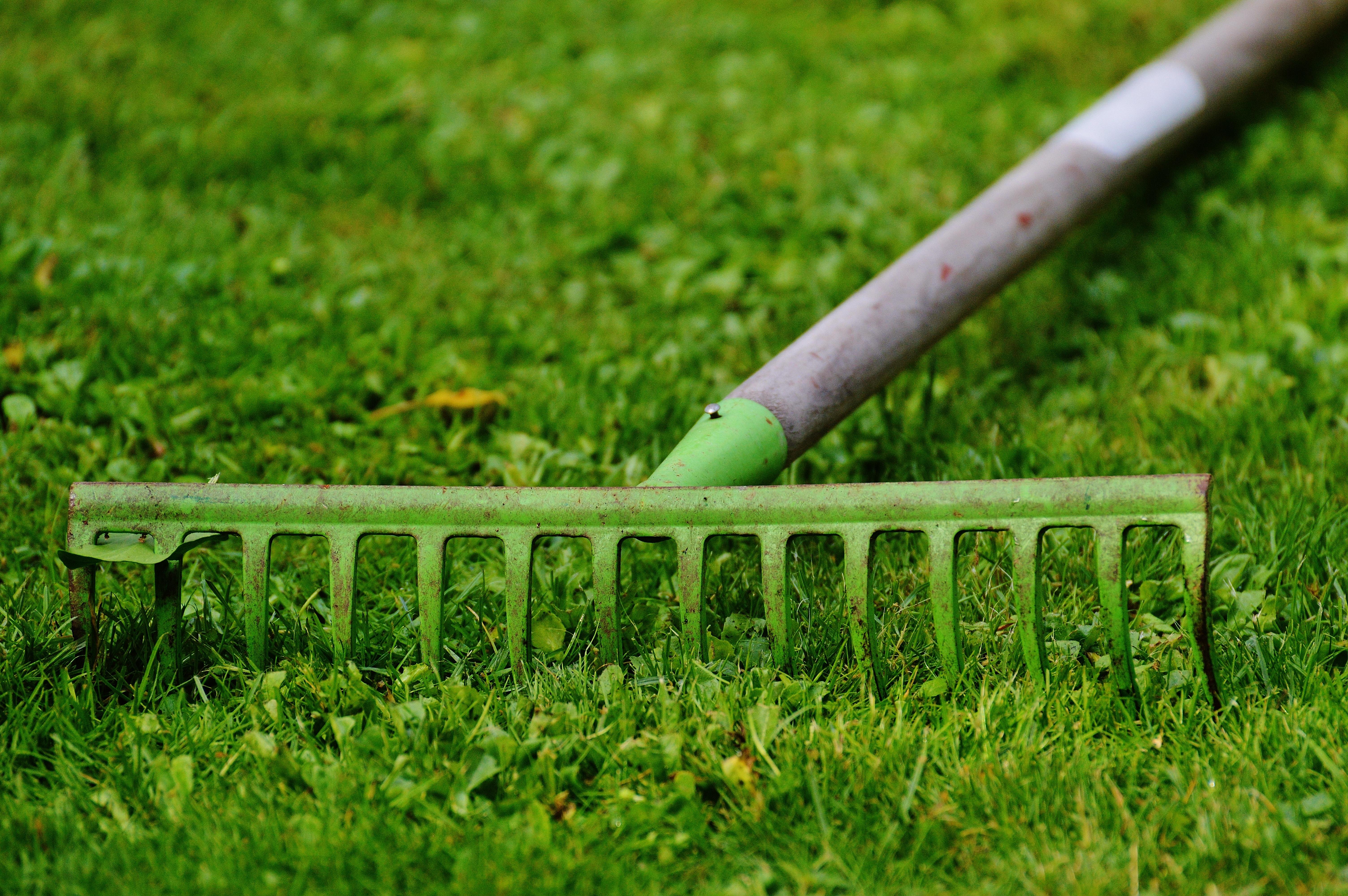 Fotos gratis : trabajo, naturaleza, césped, planta, campo, prado ...