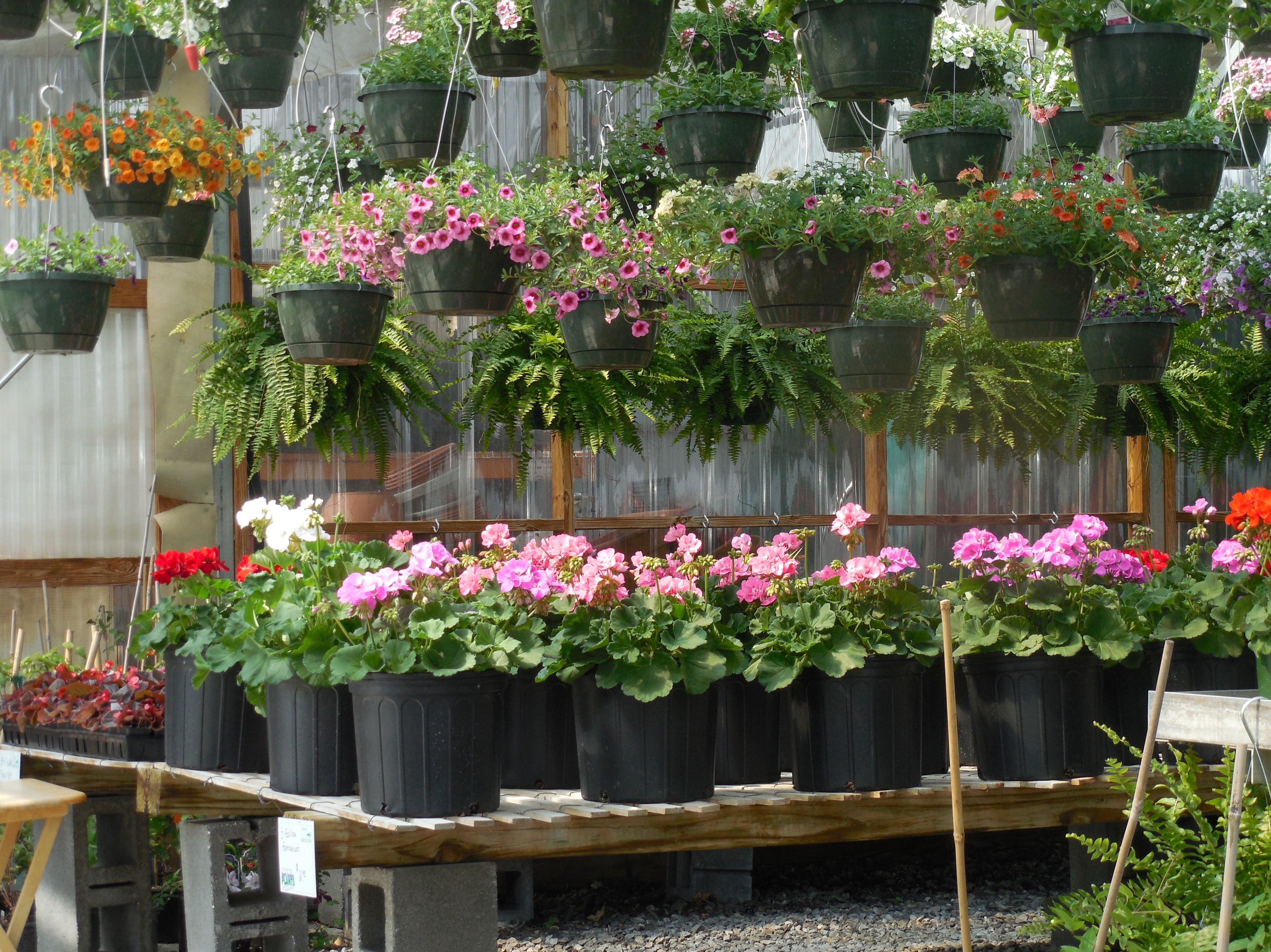 kostenlose foto : arbeit, natur, wachstum, haus, blatt, blume, Gartengerate ideen
