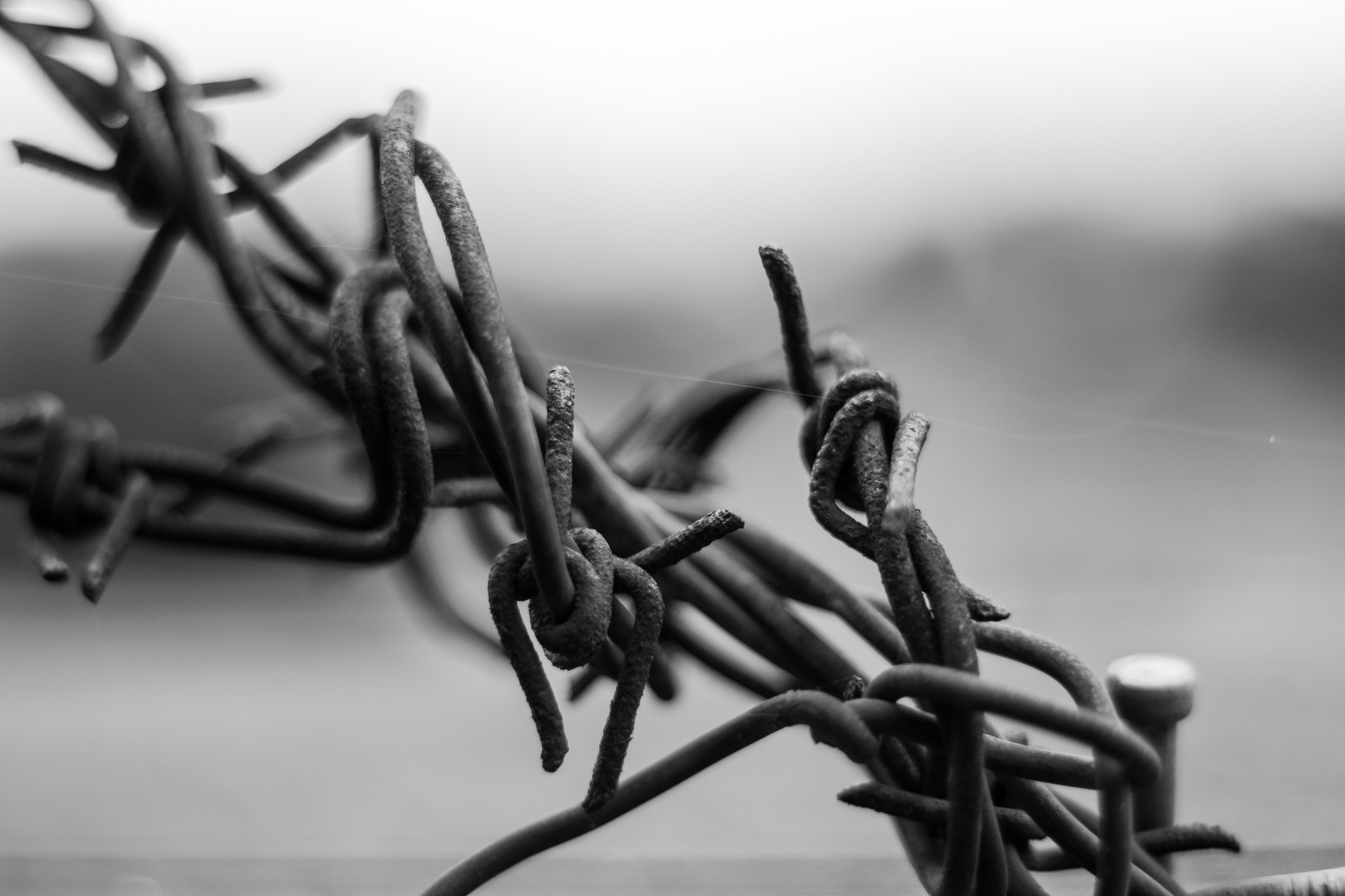 Fotos gratis : trabajo, al aire libre, rama, alambre de espino, en ...