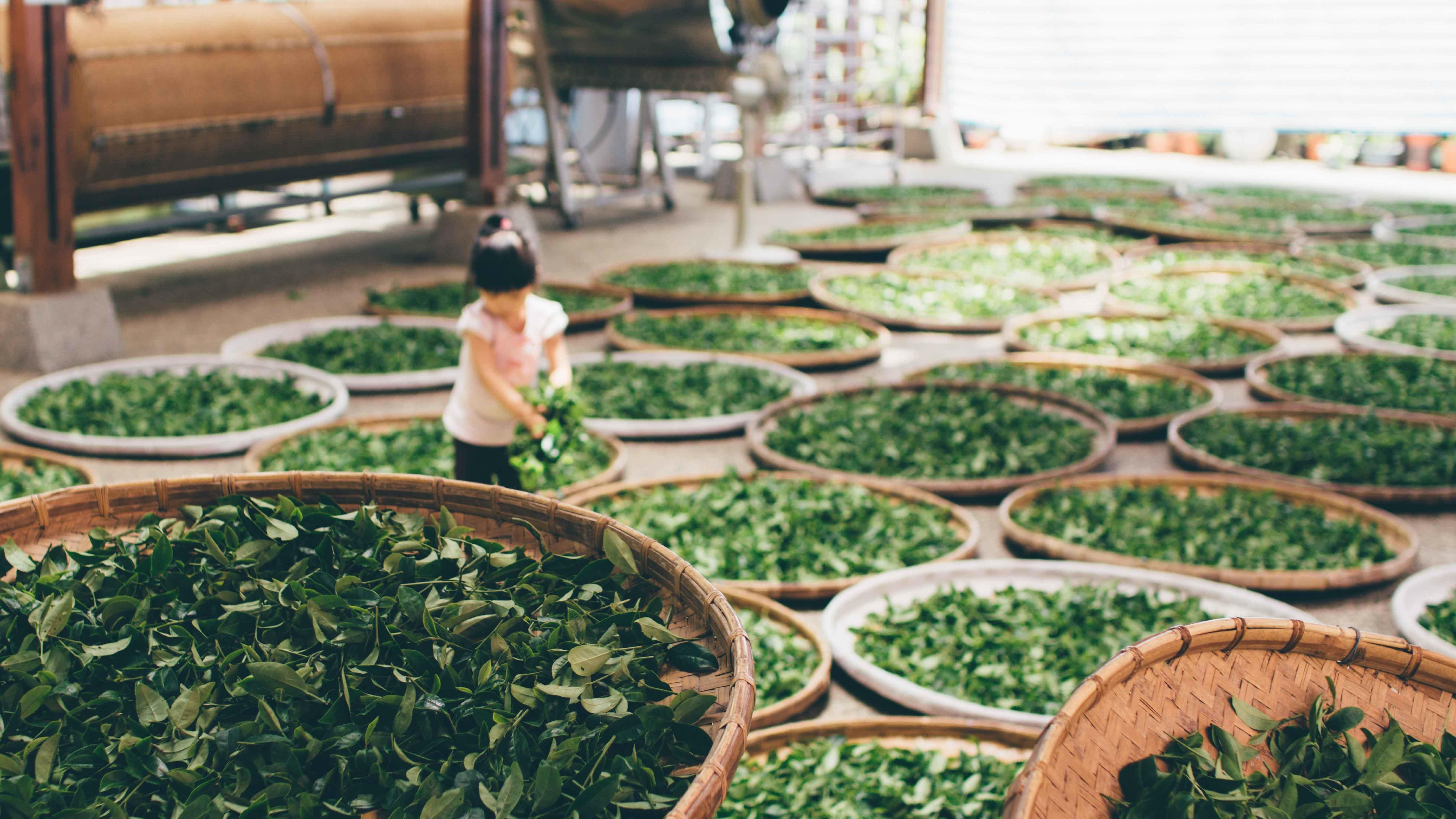 Work Tea Food Harvest Produce Vegetable Backyard Soil Asia Child Garden Public Domain Images