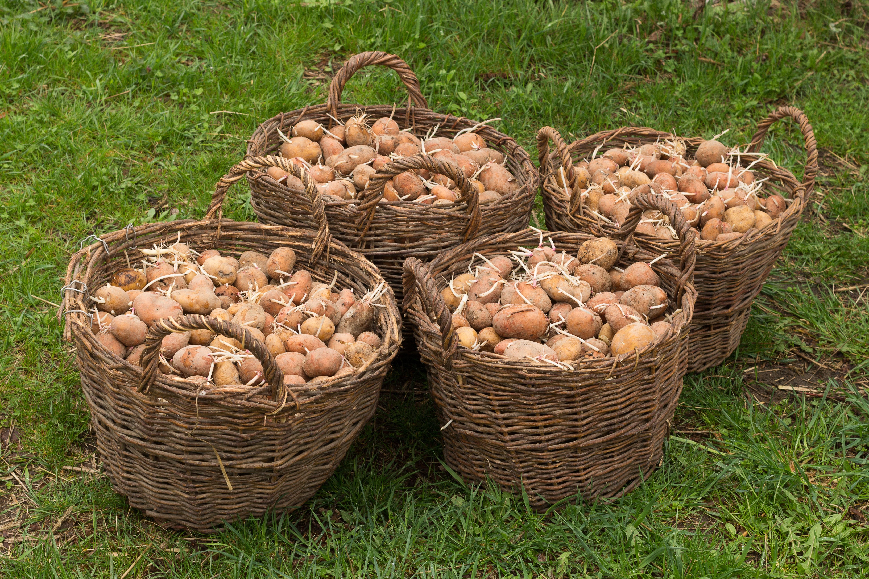 Free Images : work, tree, food, spring, harvest, produce ...