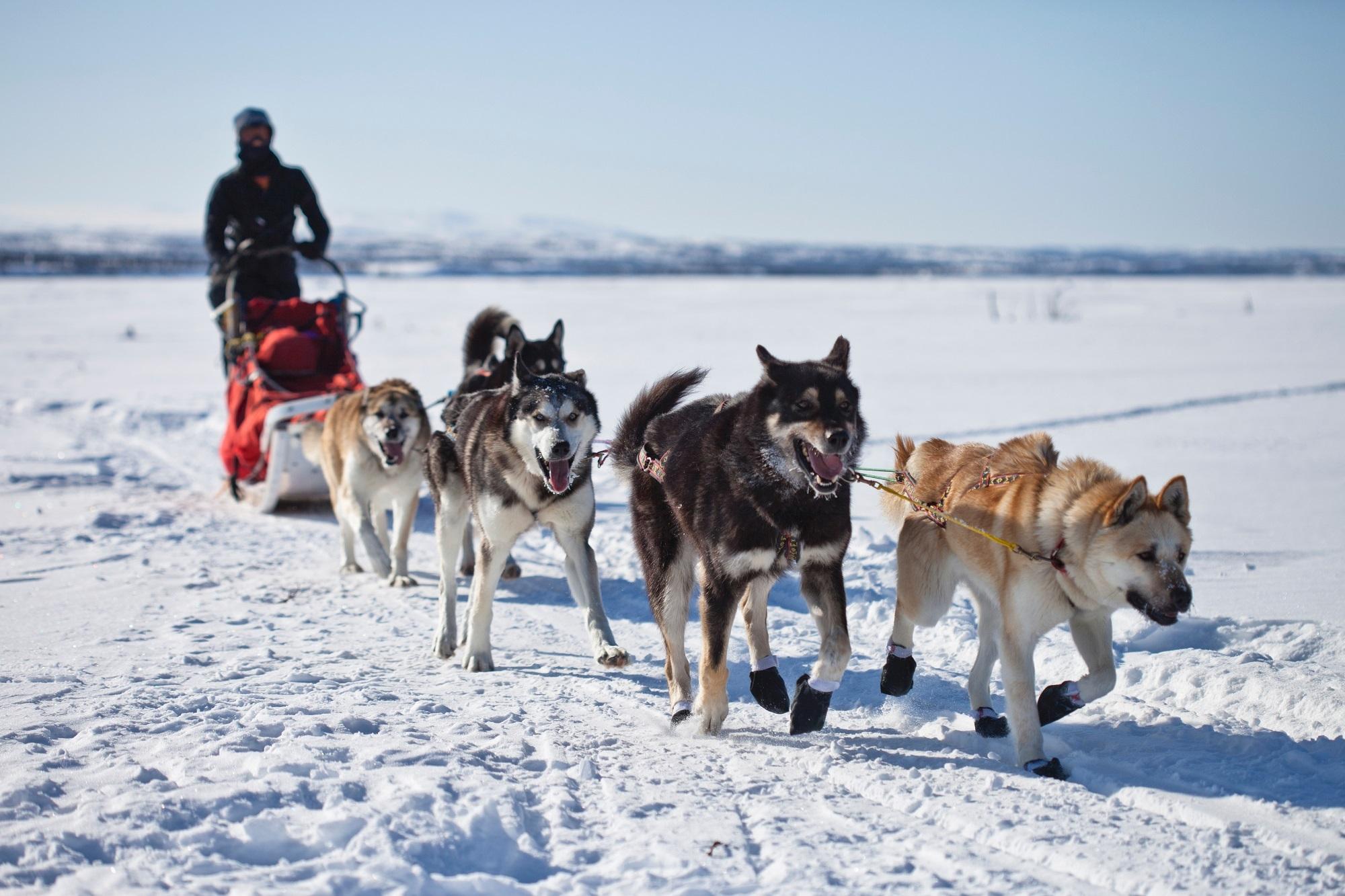 dog sledding - HD1200×799