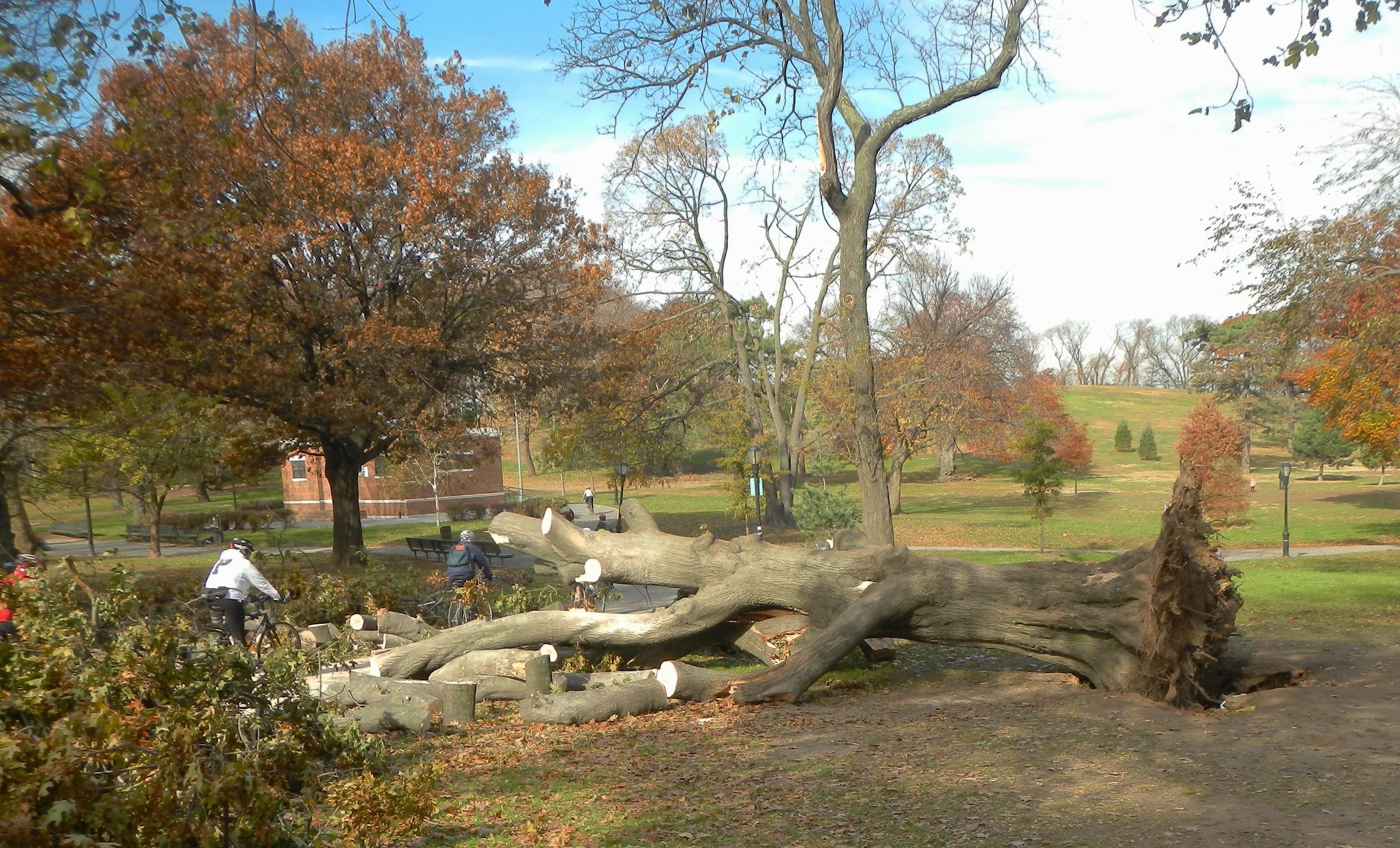 kostenlose foto arbeiten baum natur himmel fallen new york city herbst park brooklyn. Black Bedroom Furniture Sets. Home Design Ideas