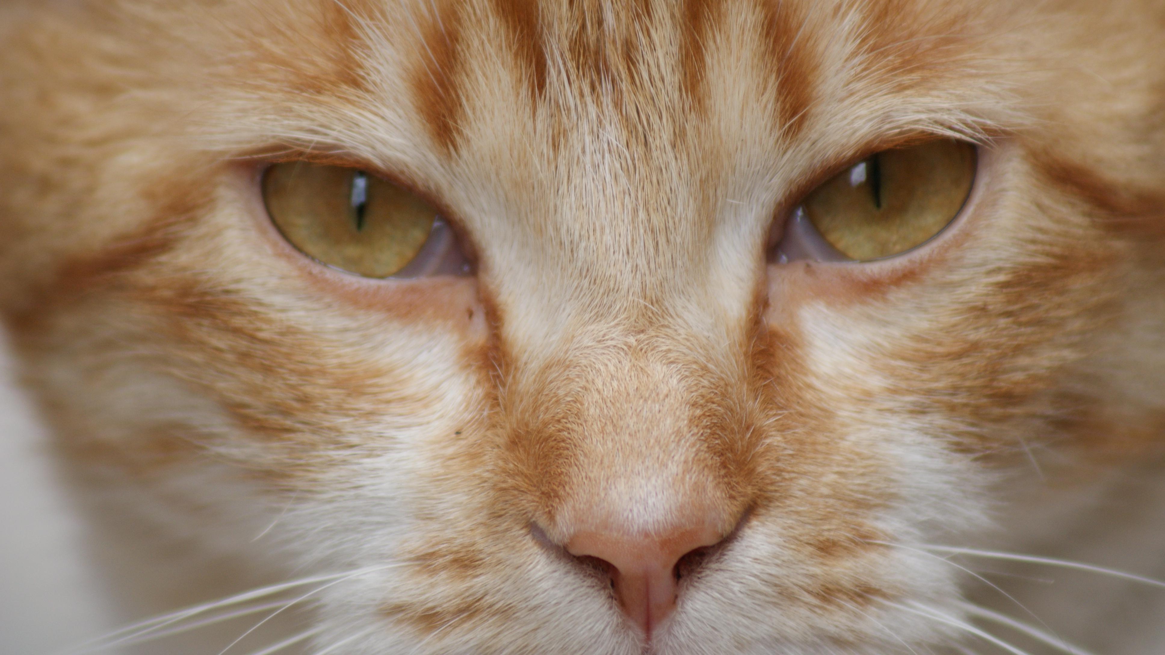Unduh 95+  Gambar Kucing Indah Paling Bagus