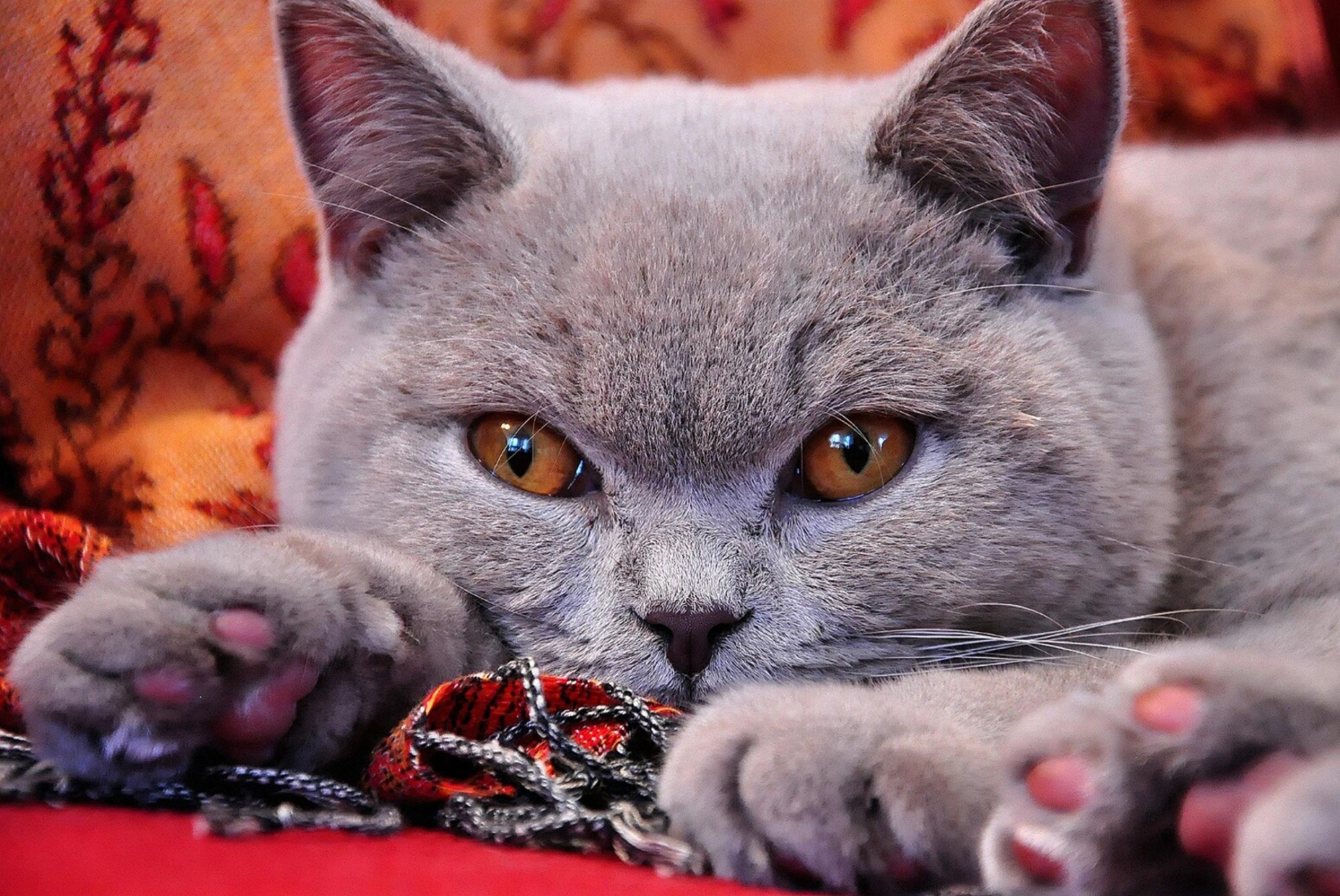 Картинки хорошего кота